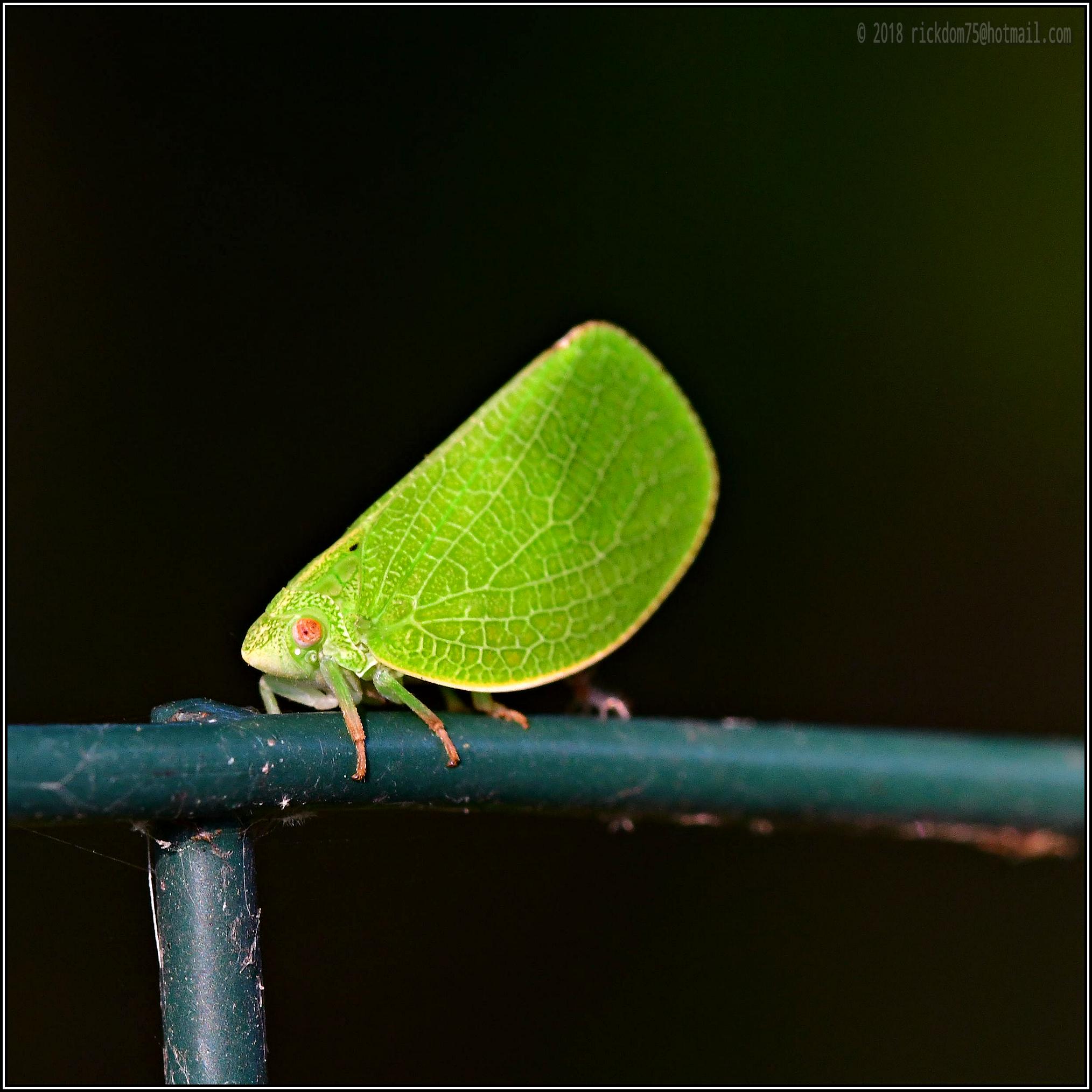 Legged Leaf...