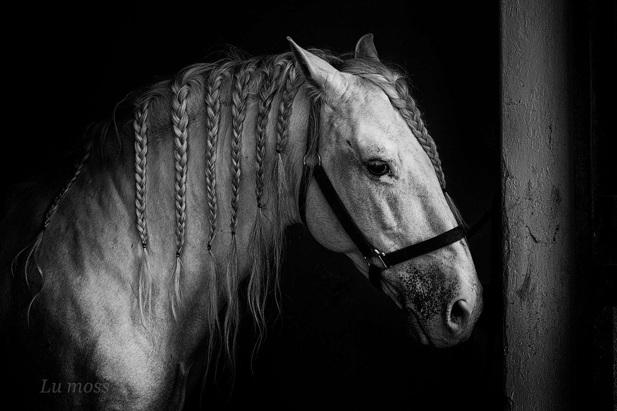 Withe Horse....