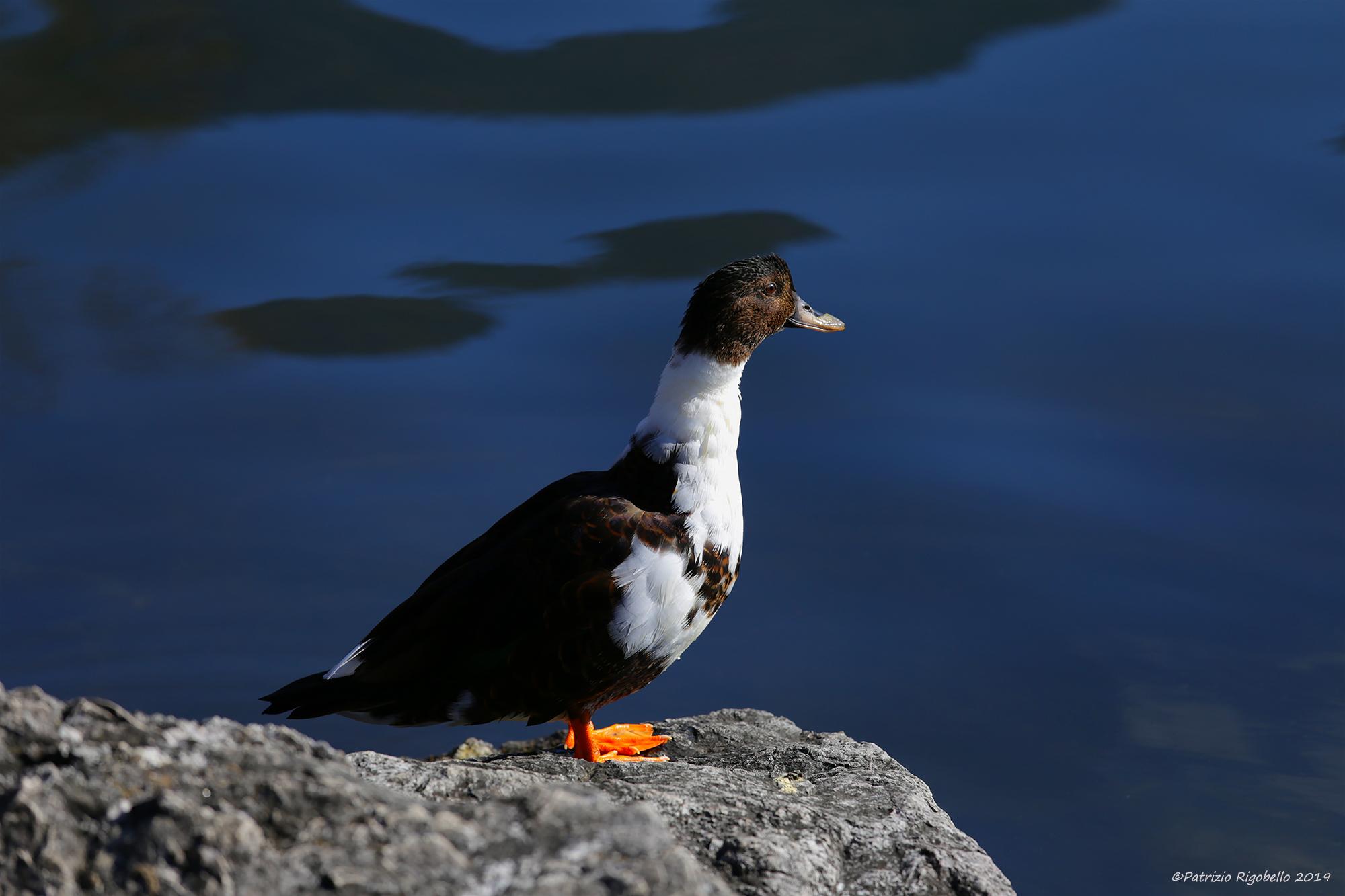 Contemplating Lake Toblino...