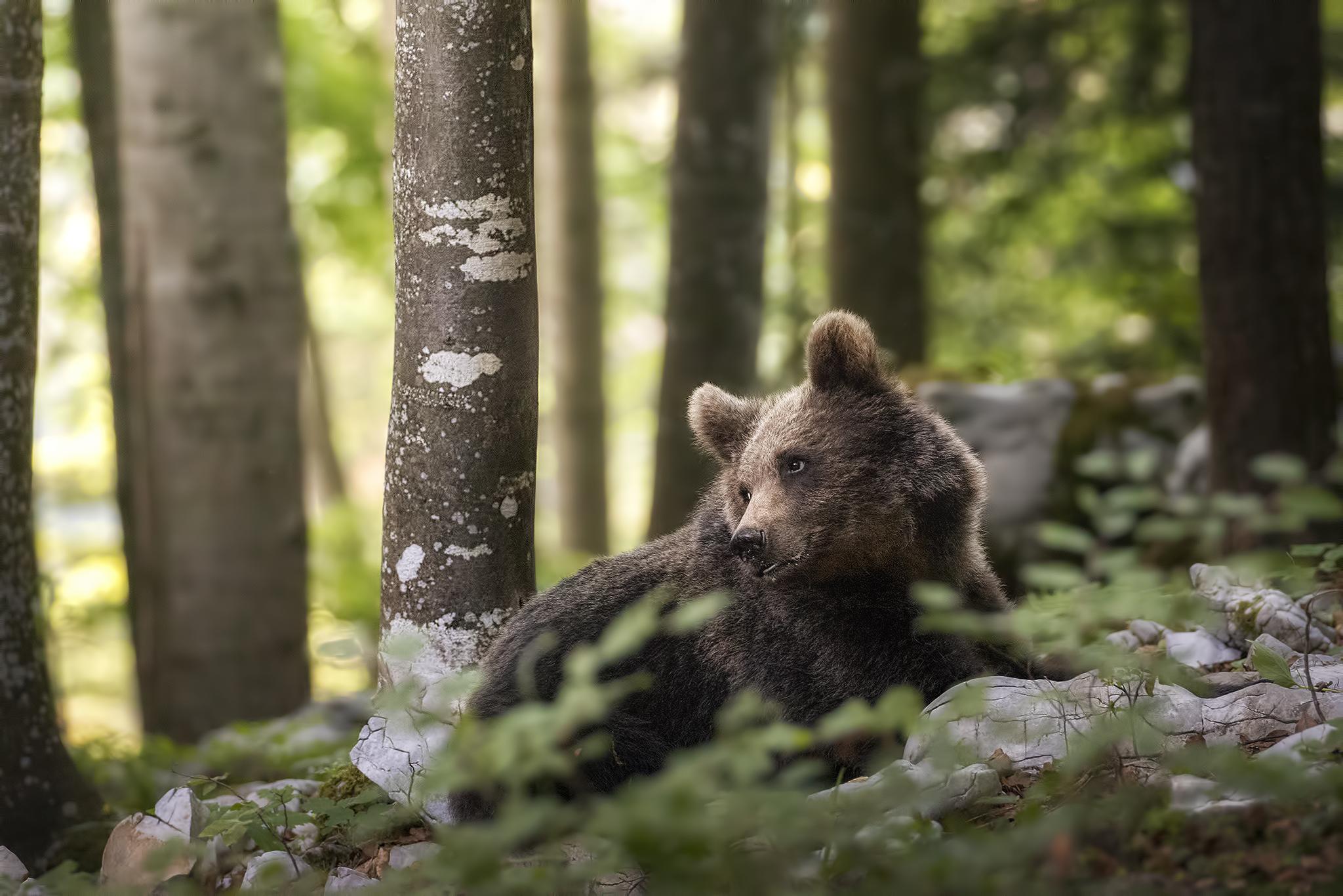 Il sorriso dell'orso...