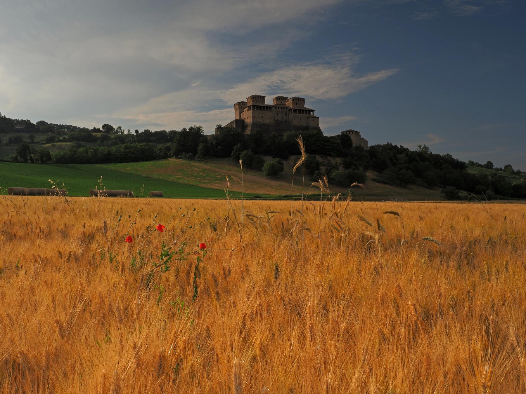 The gold of Torrechiara...