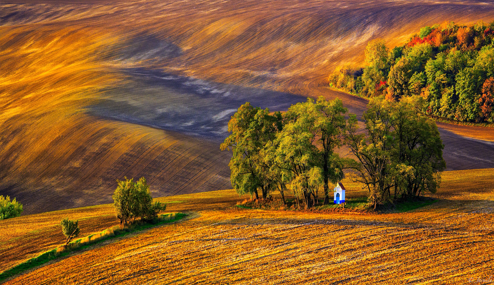 The embrace of the trees at sunset in Moravia ...