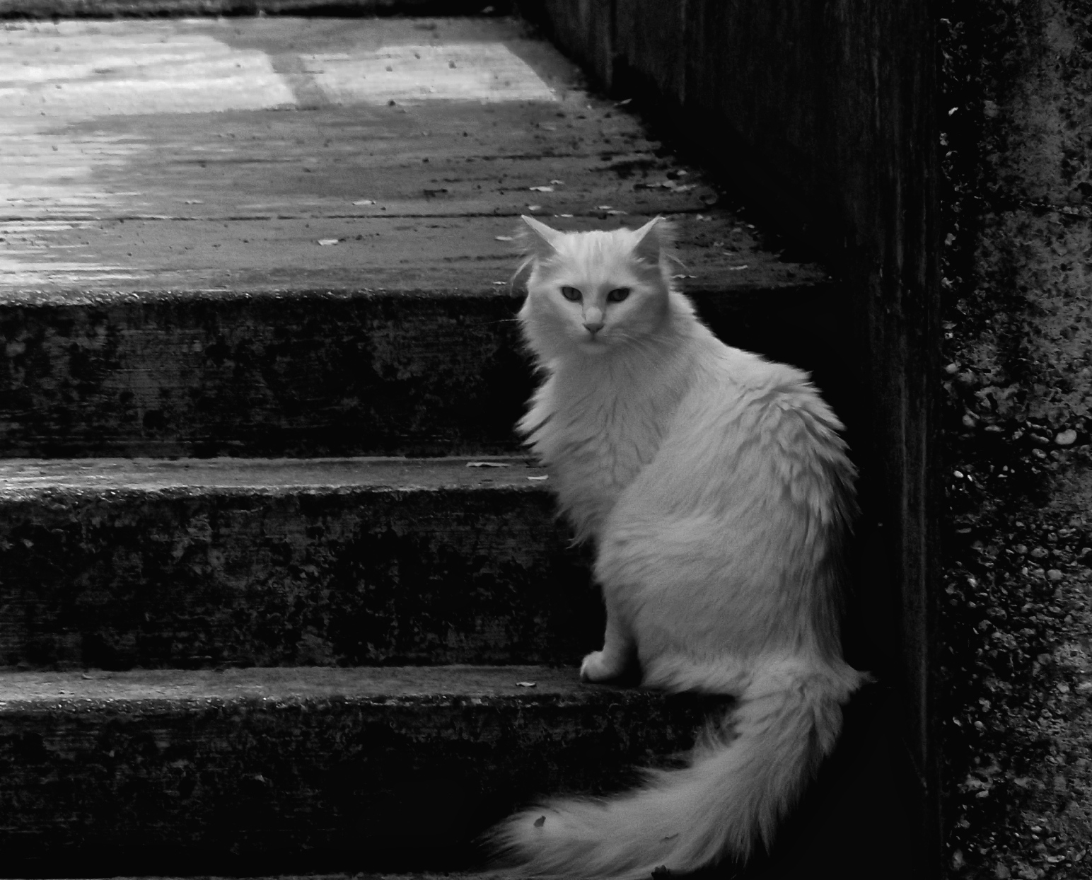 Cat at the foot of a ladder...