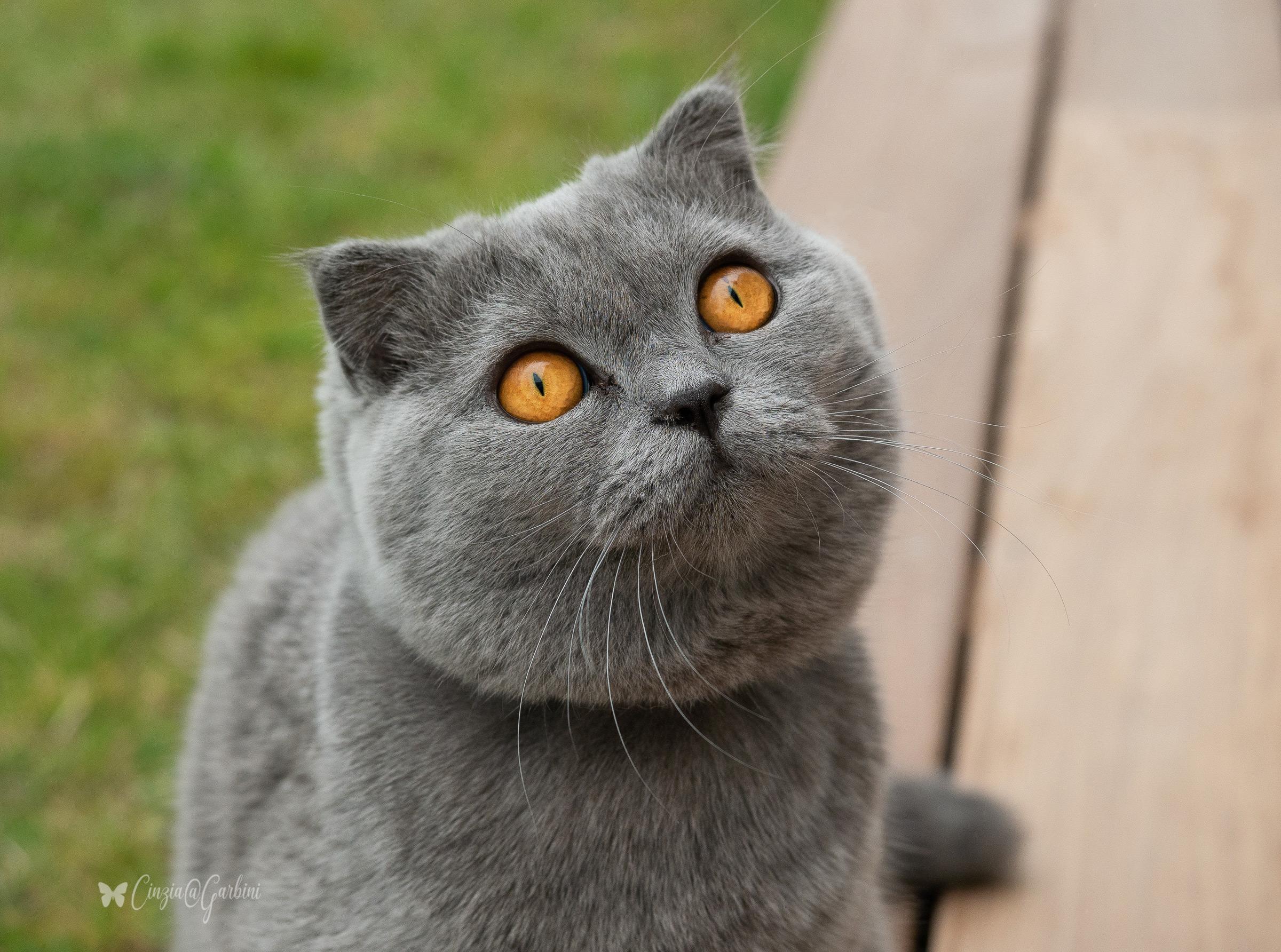 feline curiosity...