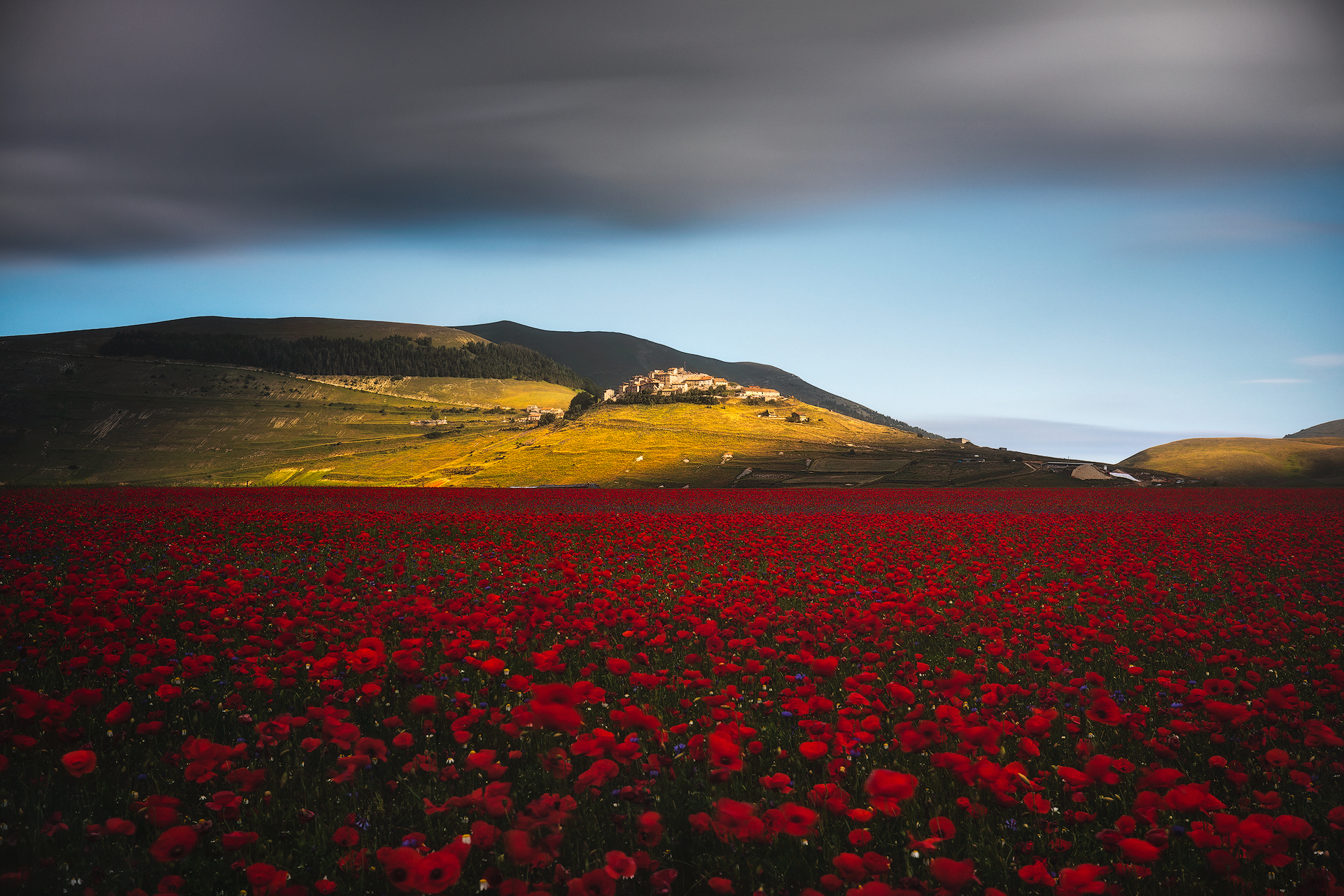 Red Carpet...