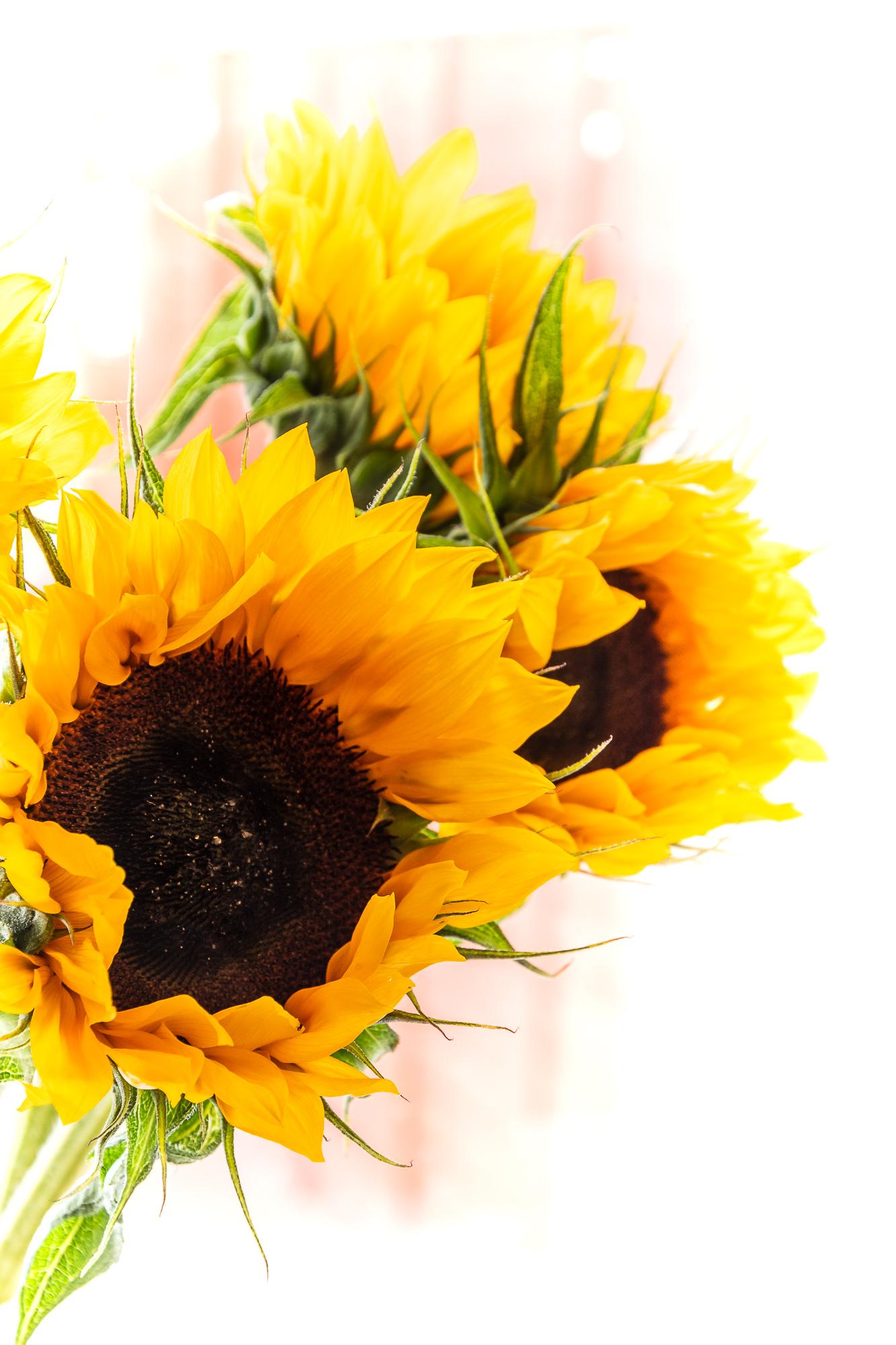 I Give You Sunflowers...