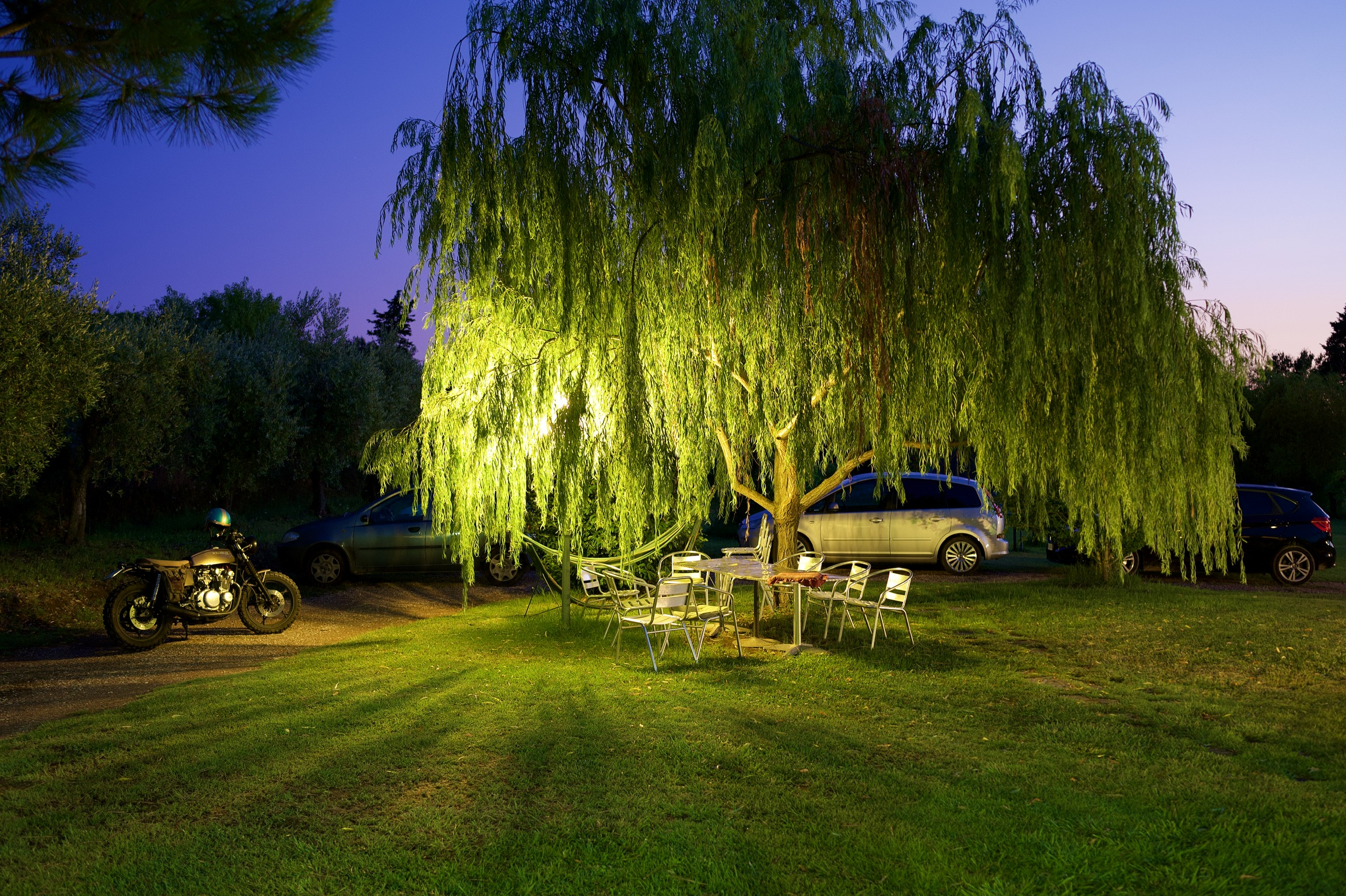 The Willow...