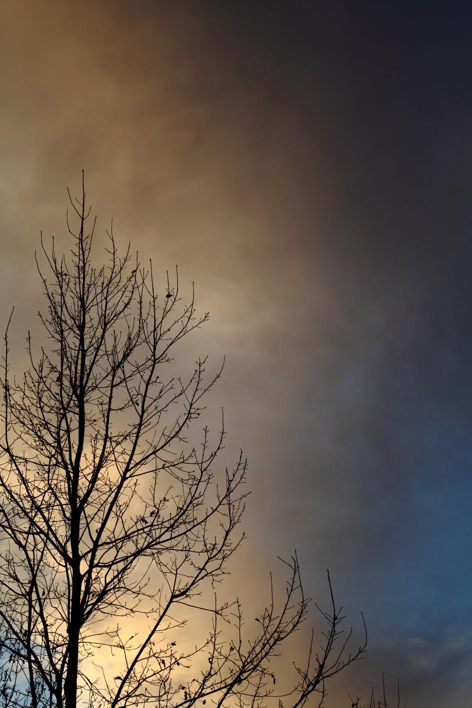 Albero al tramonto...