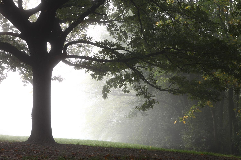 Albero nella nebbia...