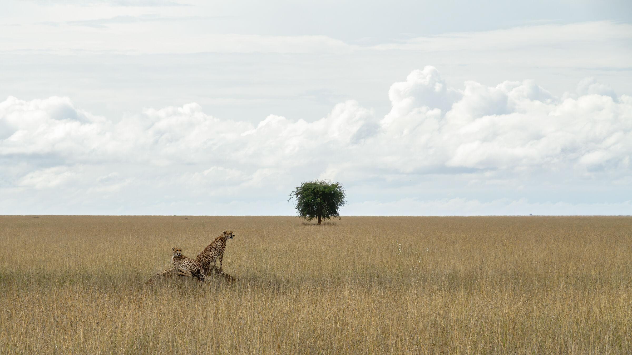 Tanzania....