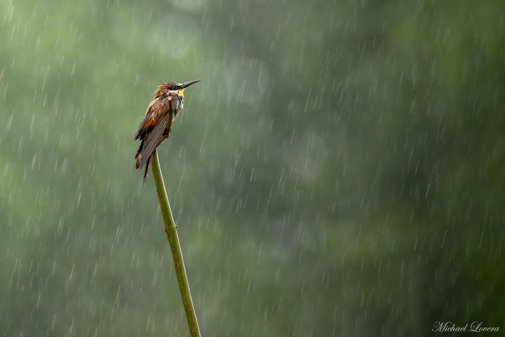 Sotto alla pioggia......