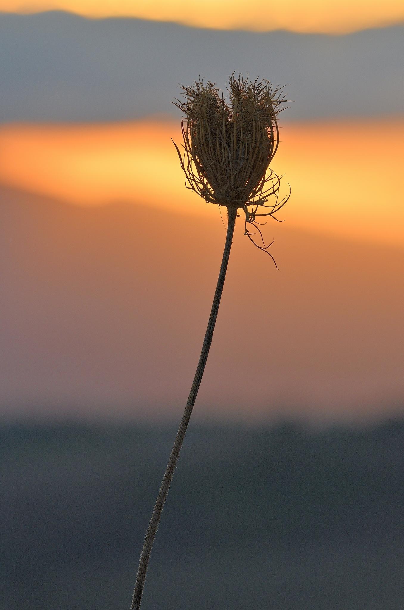 Solo col tramonto...