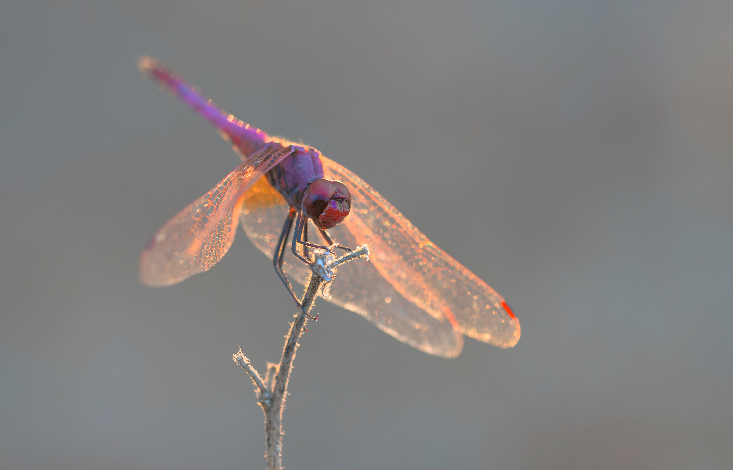 dragonfly...