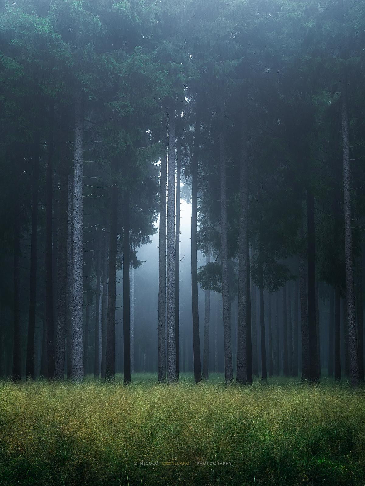 Il segreto del bosco vecchio...