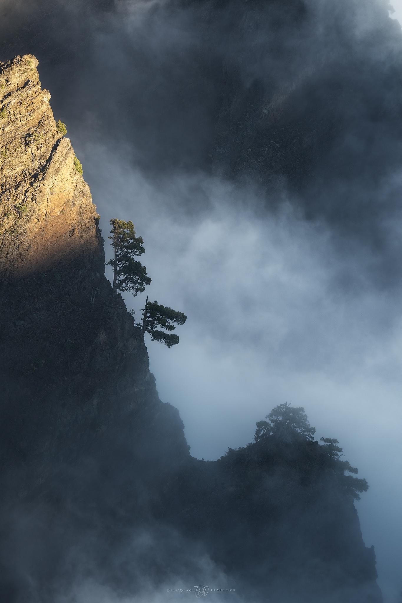 Trees on the ridge...