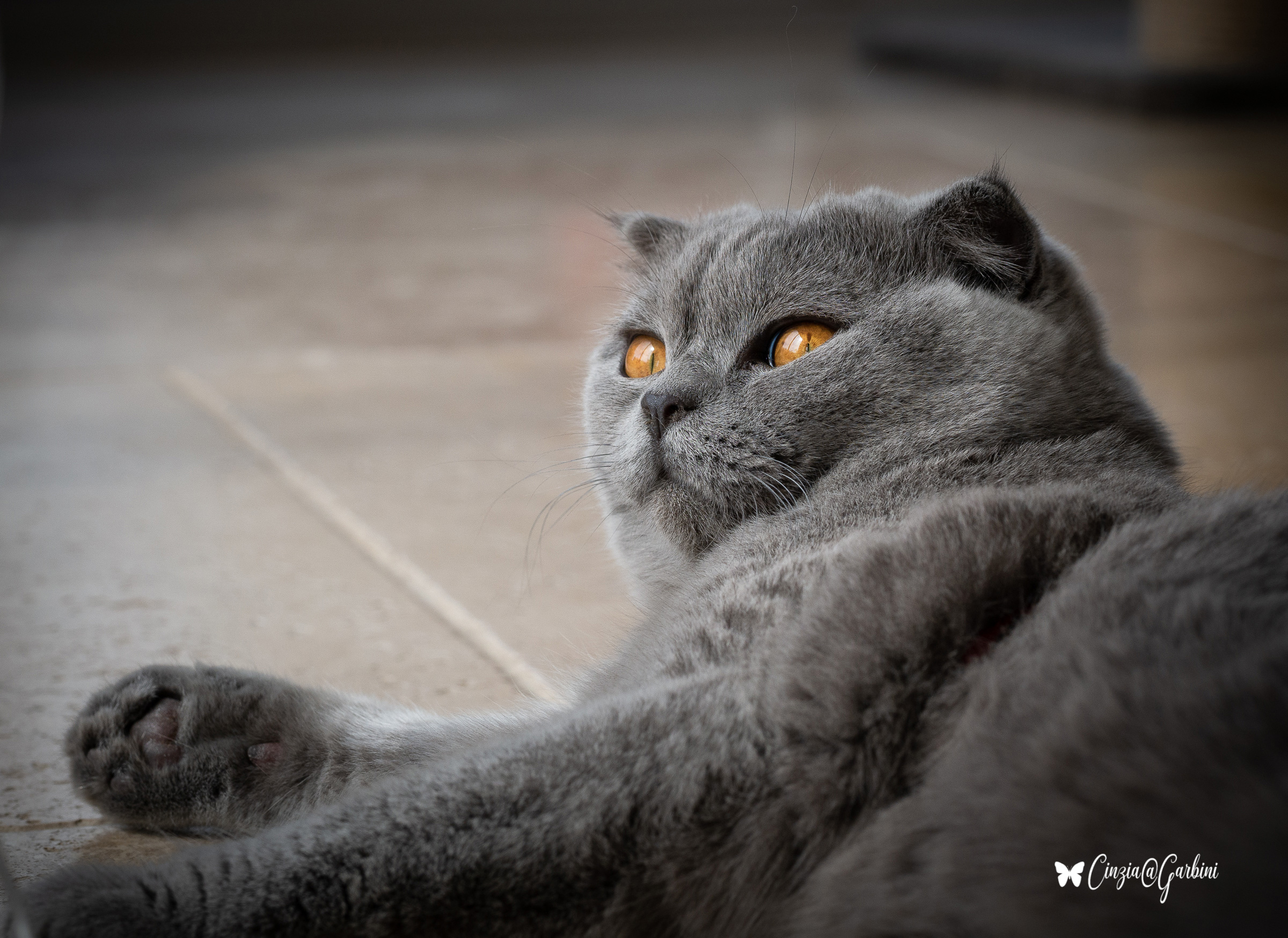 just photo! Feline relaxation...