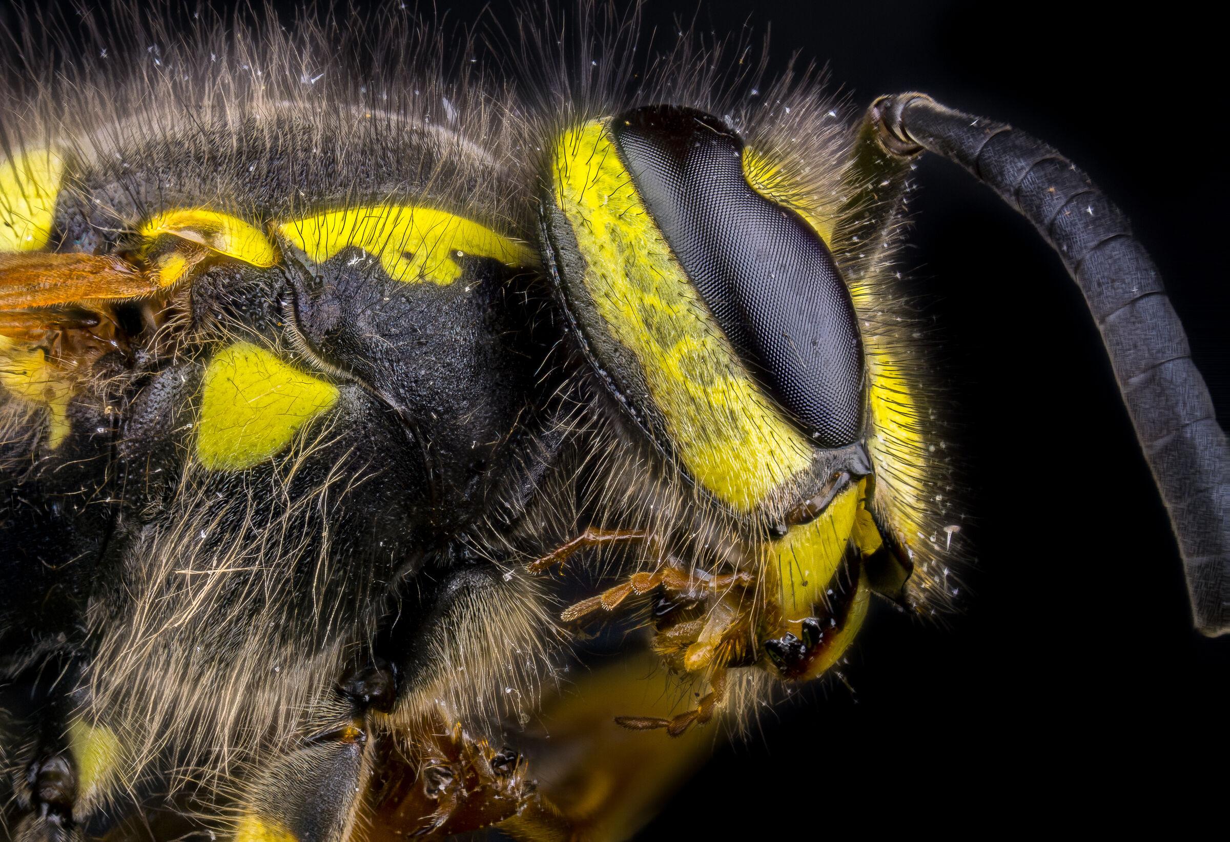 Wasp...