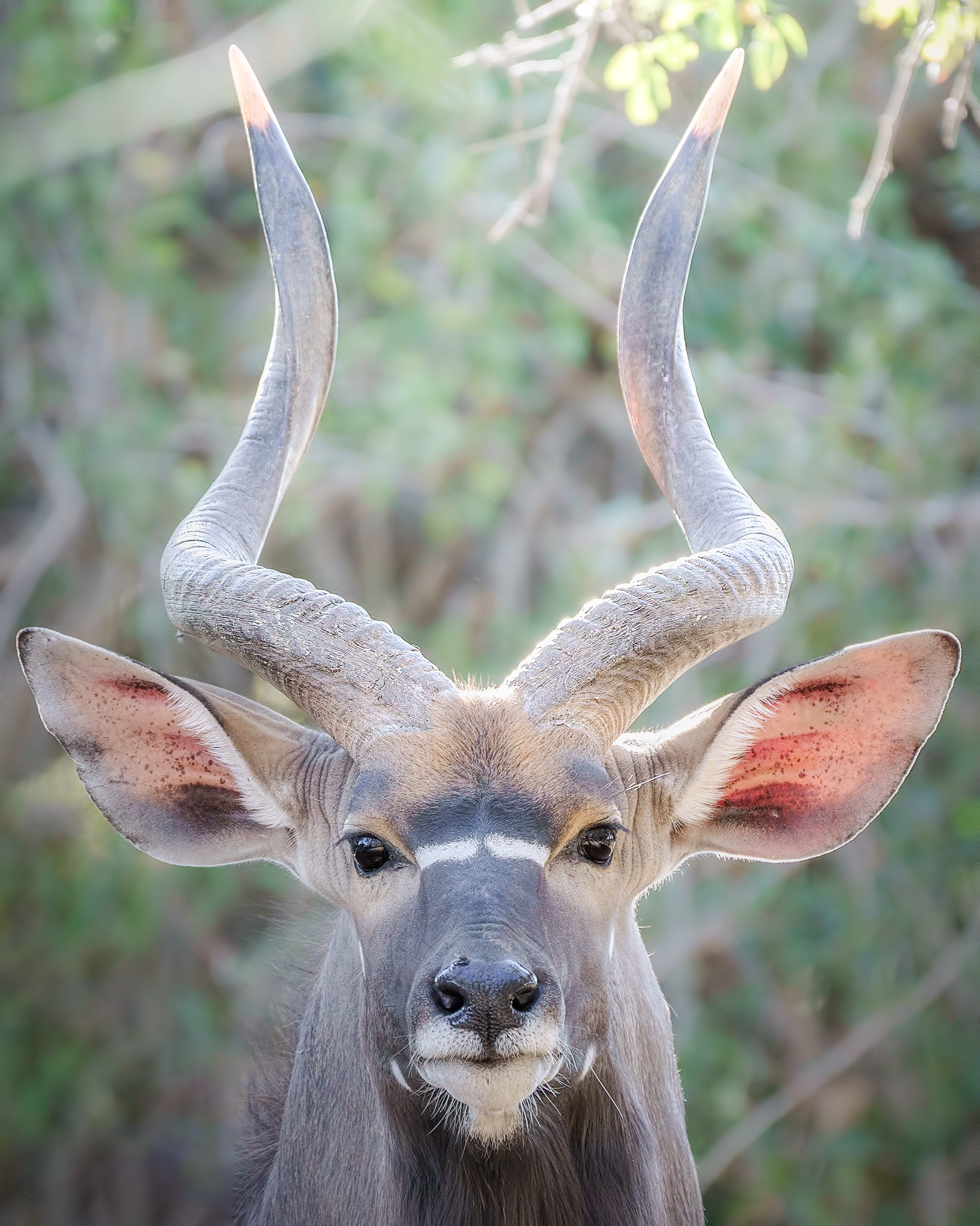 African close-up...
