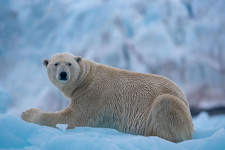 Polar bear on an iceberg...