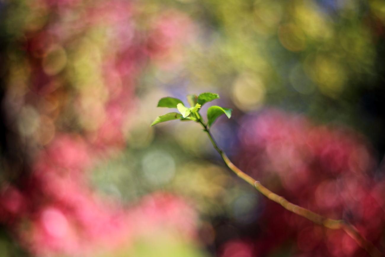 Nature colors portrait 1...