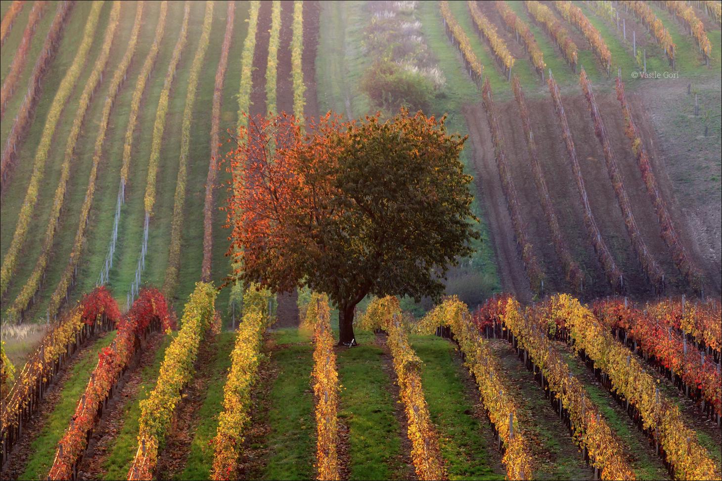 Vinic podzim...