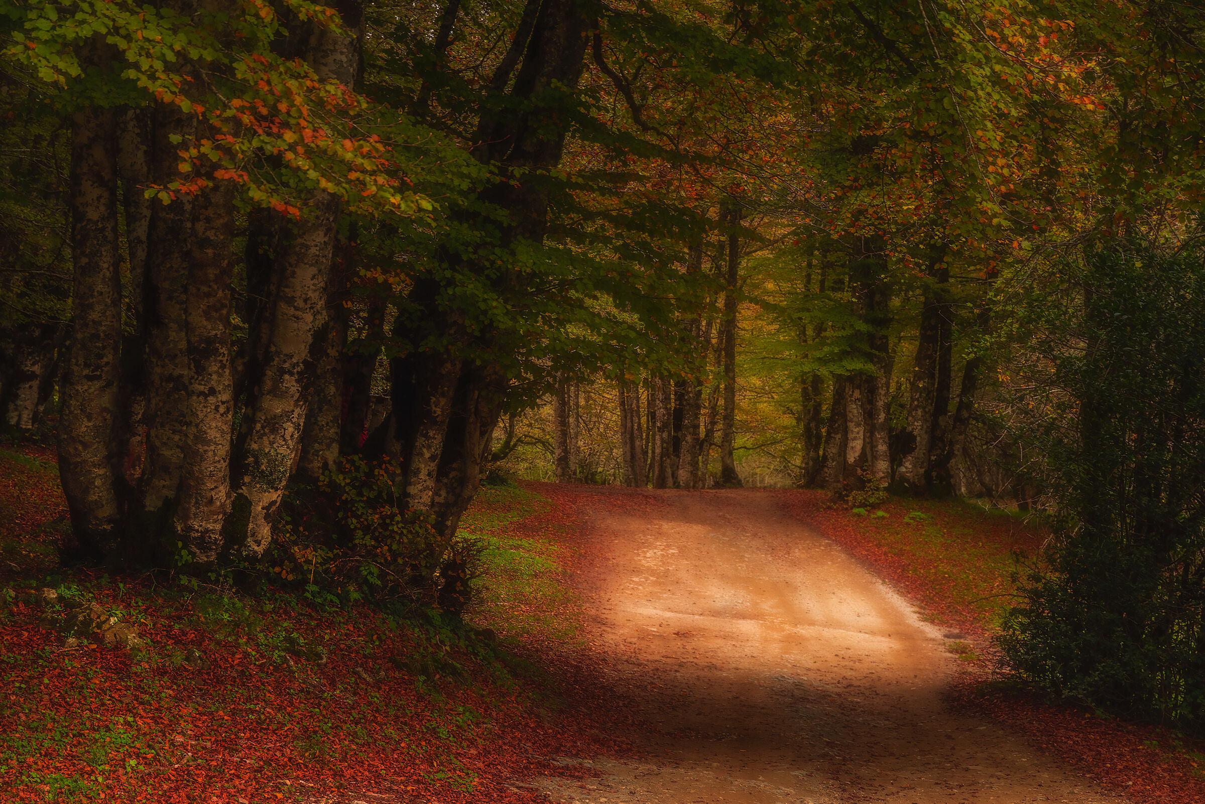 Il bosco magico...
