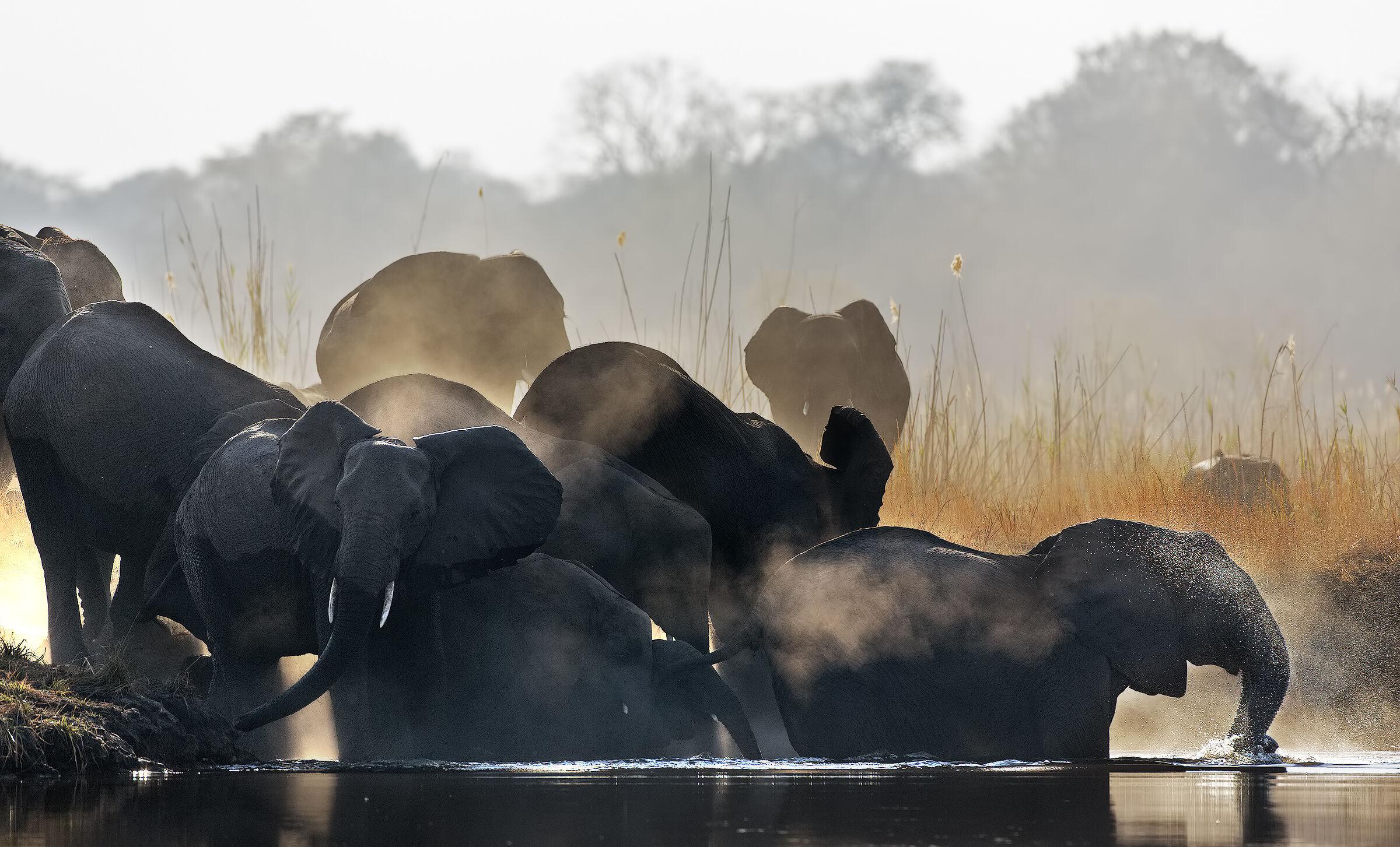 Elefanti al sorgere del sole...