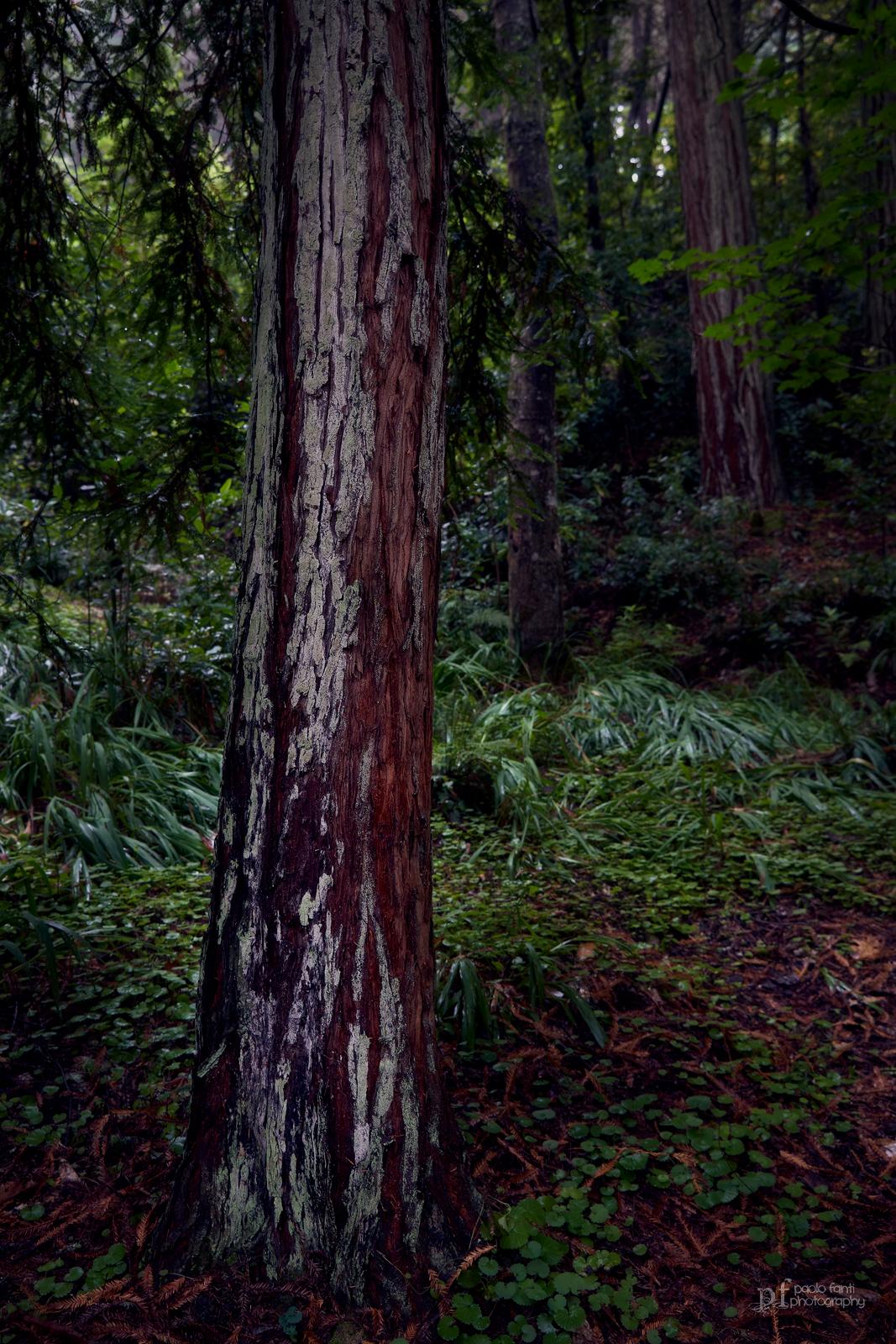Foresta...