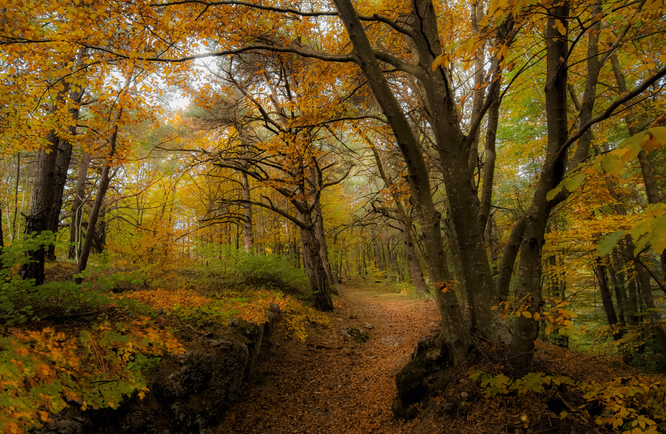 Take it easy.... the forest rests...