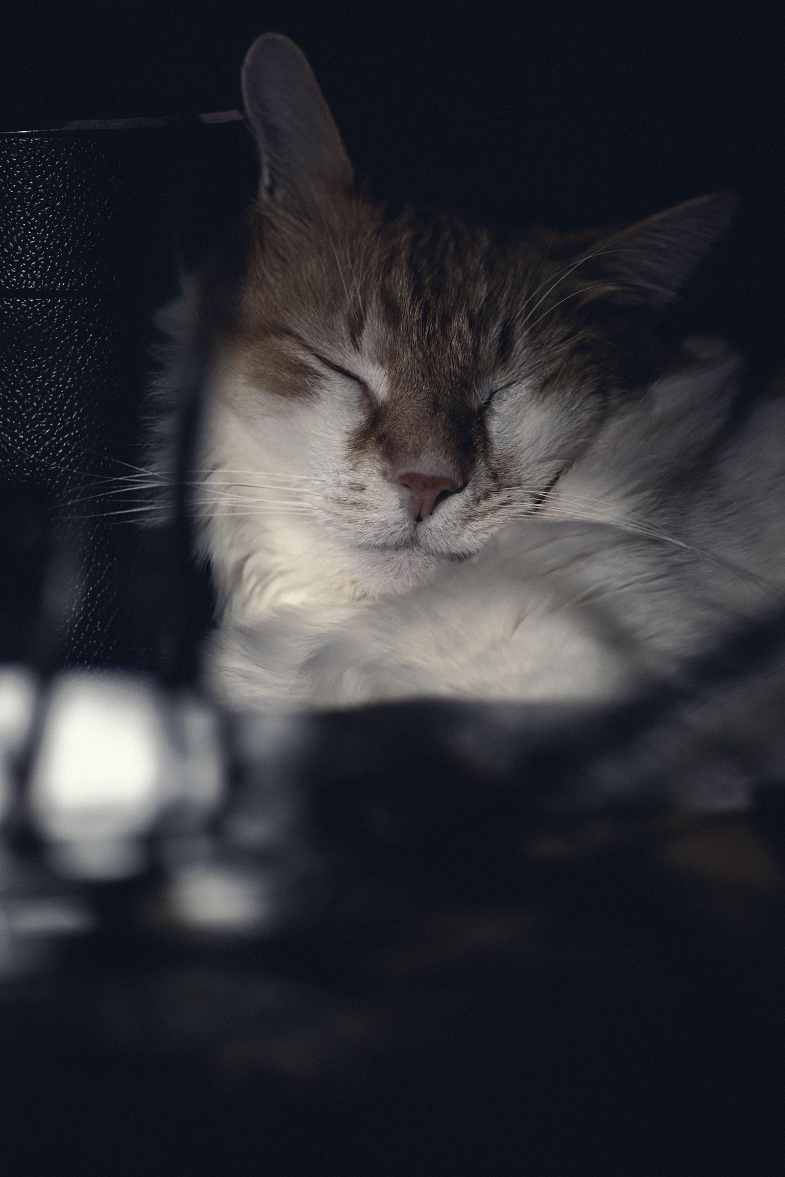 RonFF, notturno a 135mm sul mio davanzale...