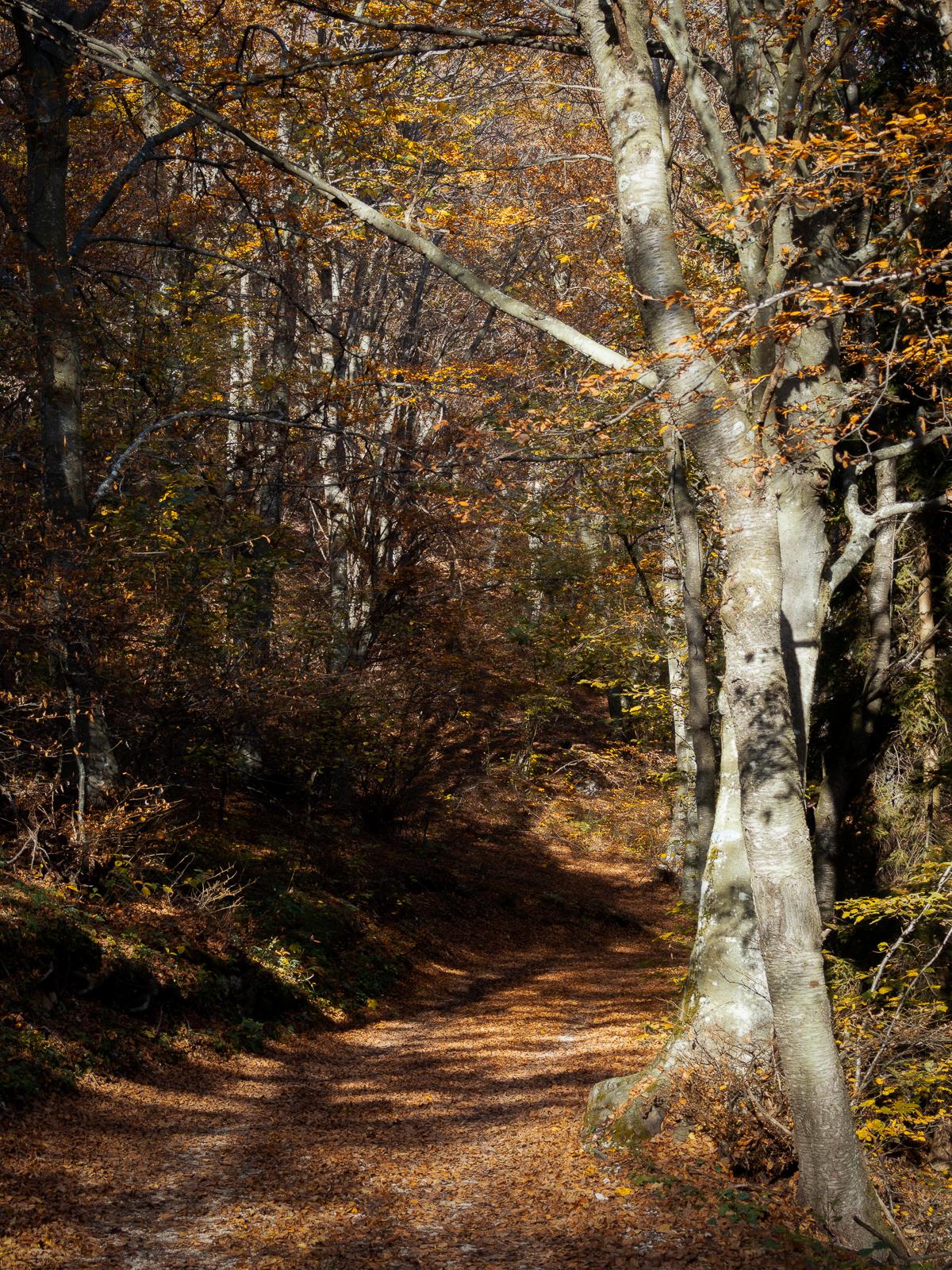 Bosco in autunno...
