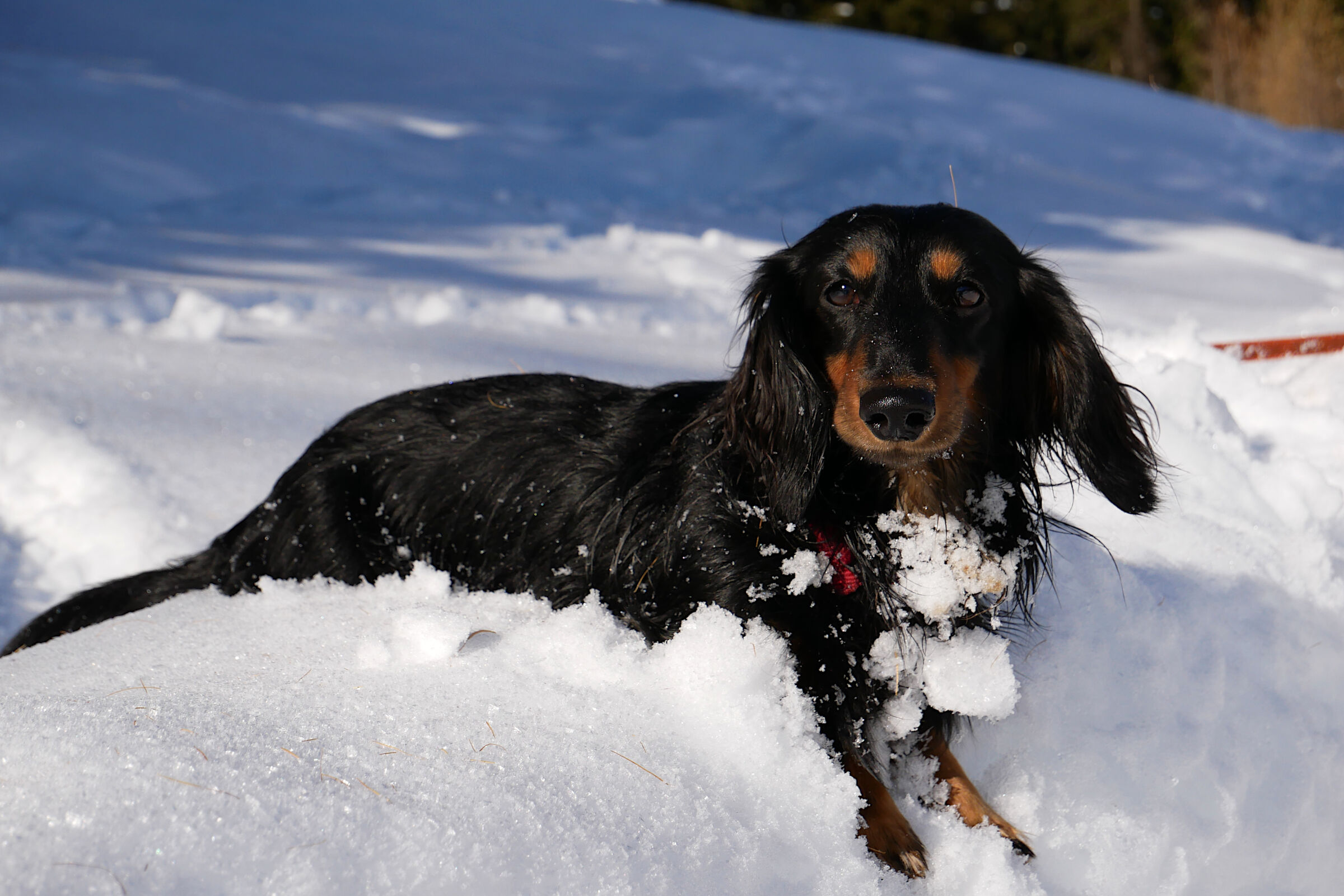 Relaxing in the snow...
