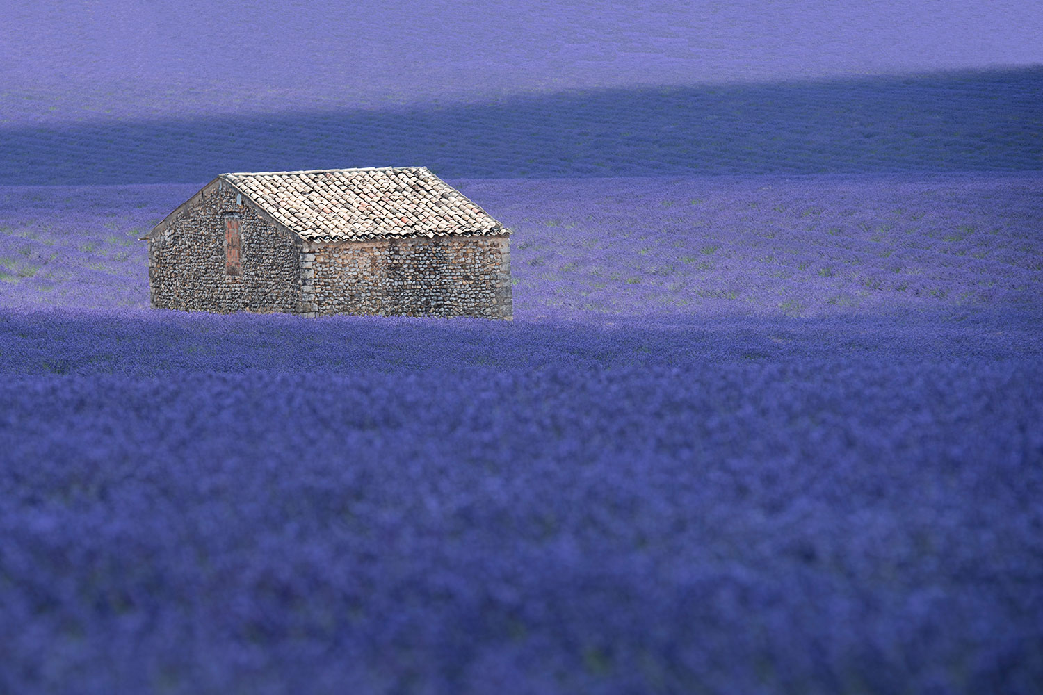 The House in the Purple...