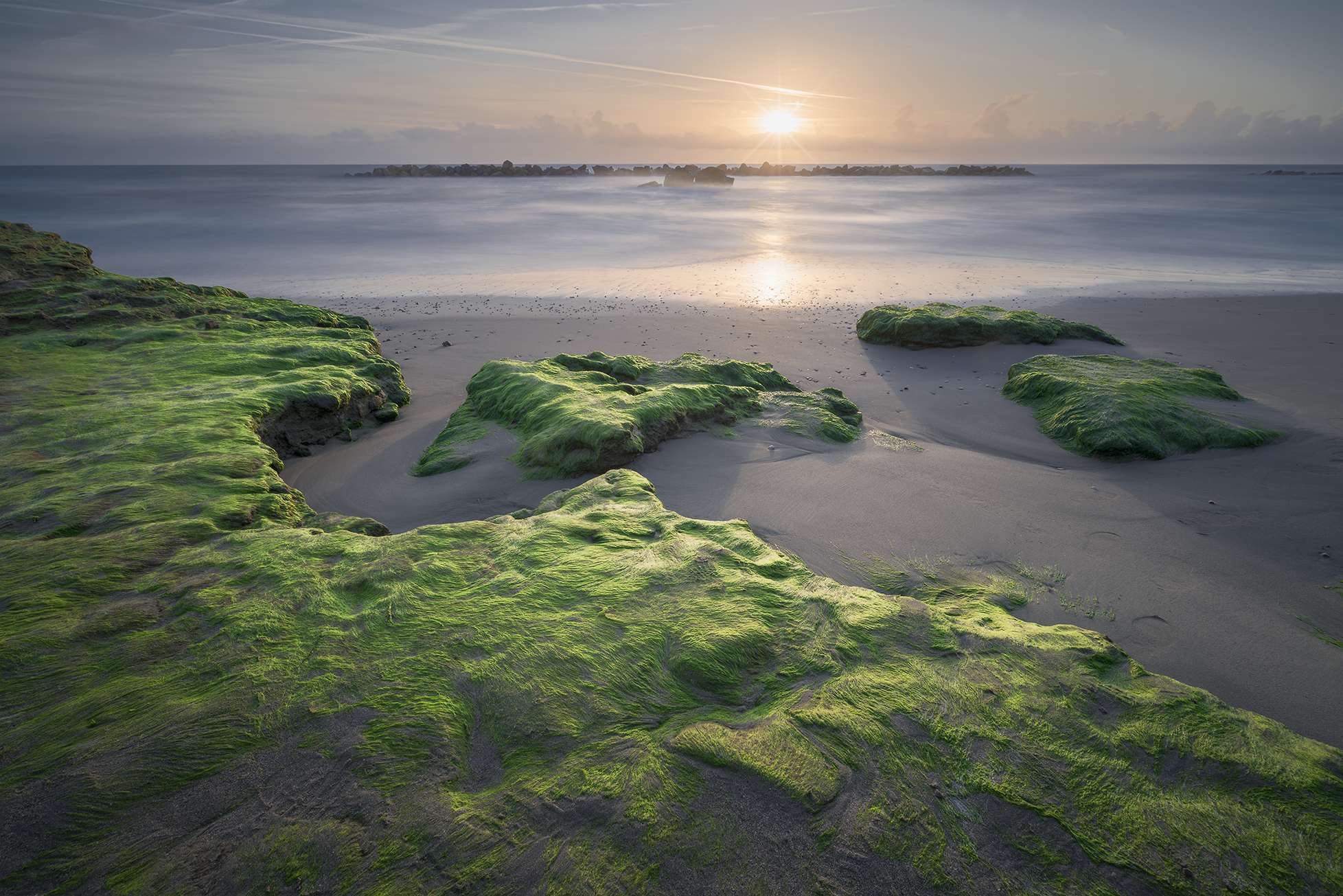 A Game of Light among the Seaweed ...