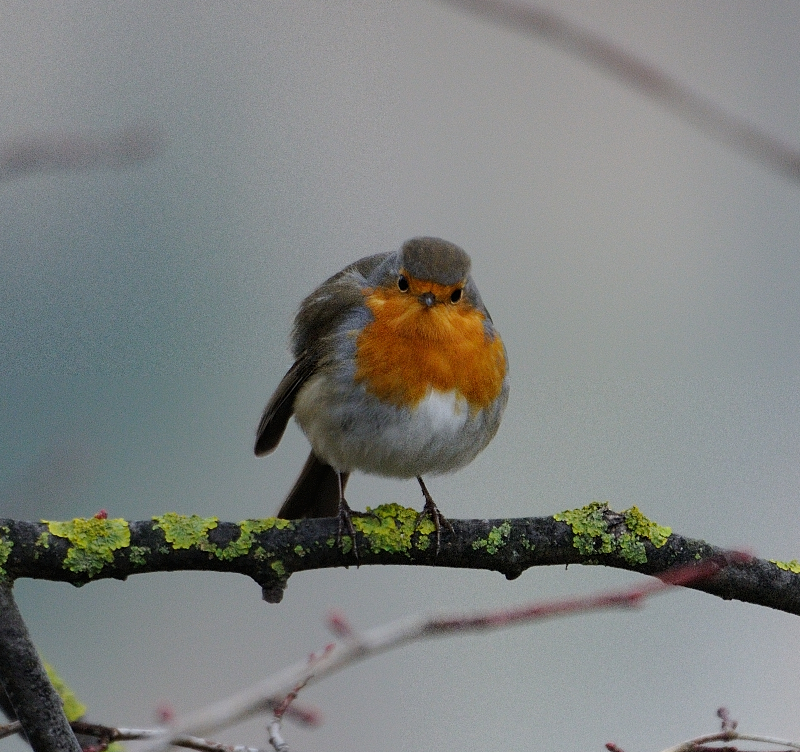 Autumn and the robin...
