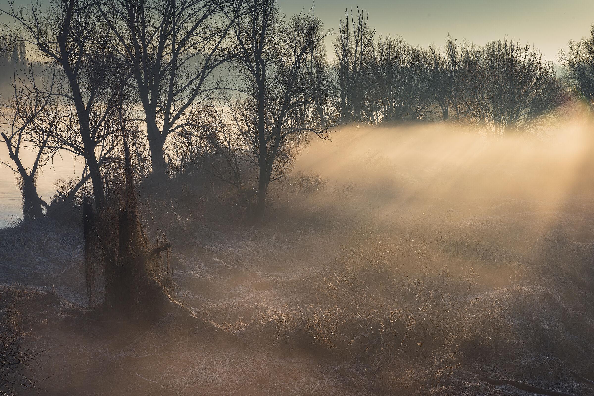 Fog and light...