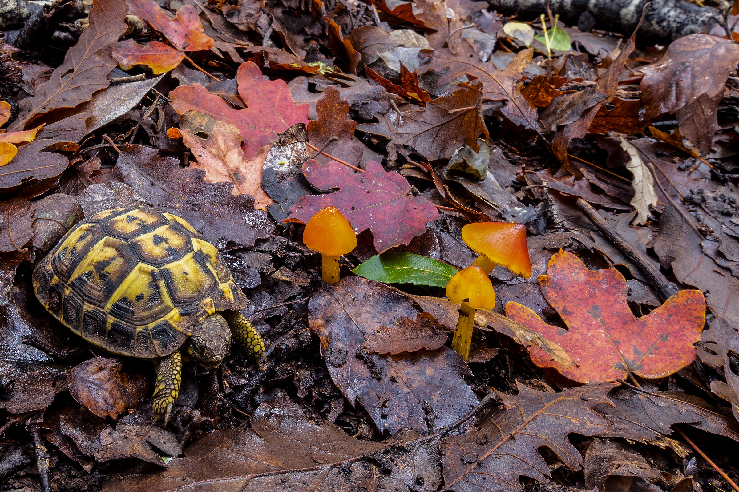 Young Turtle...