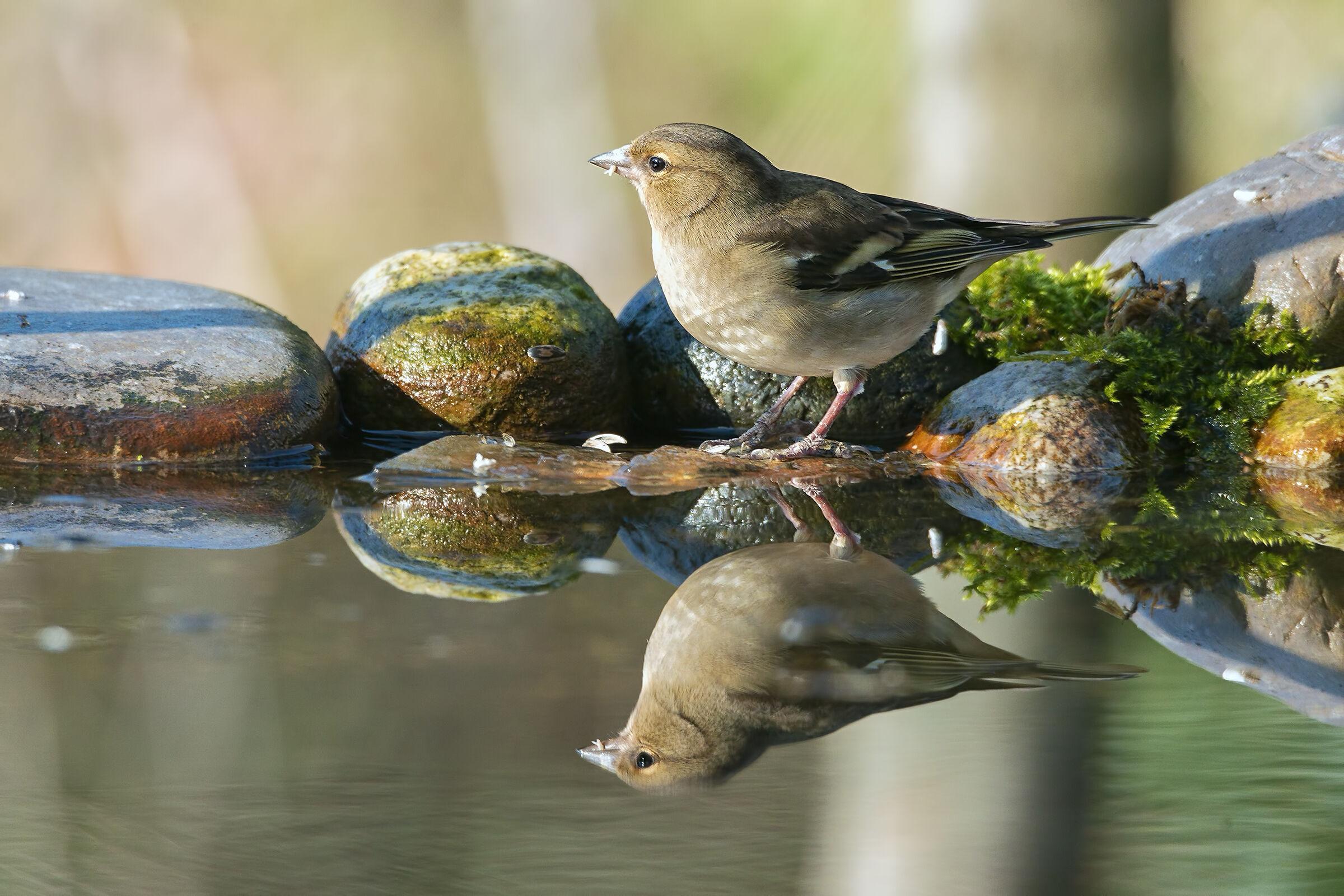 ?? Finch...