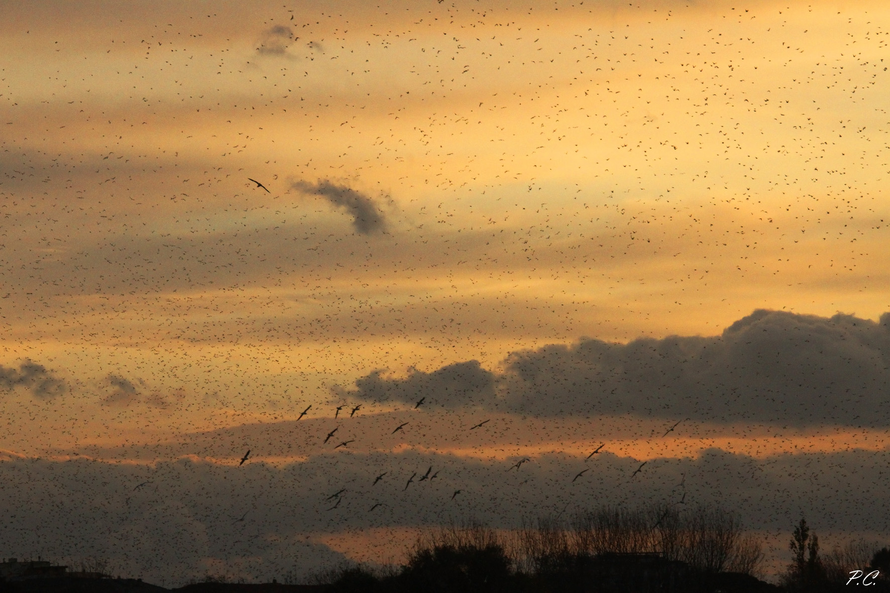 sunrise with starlings and seagulls...