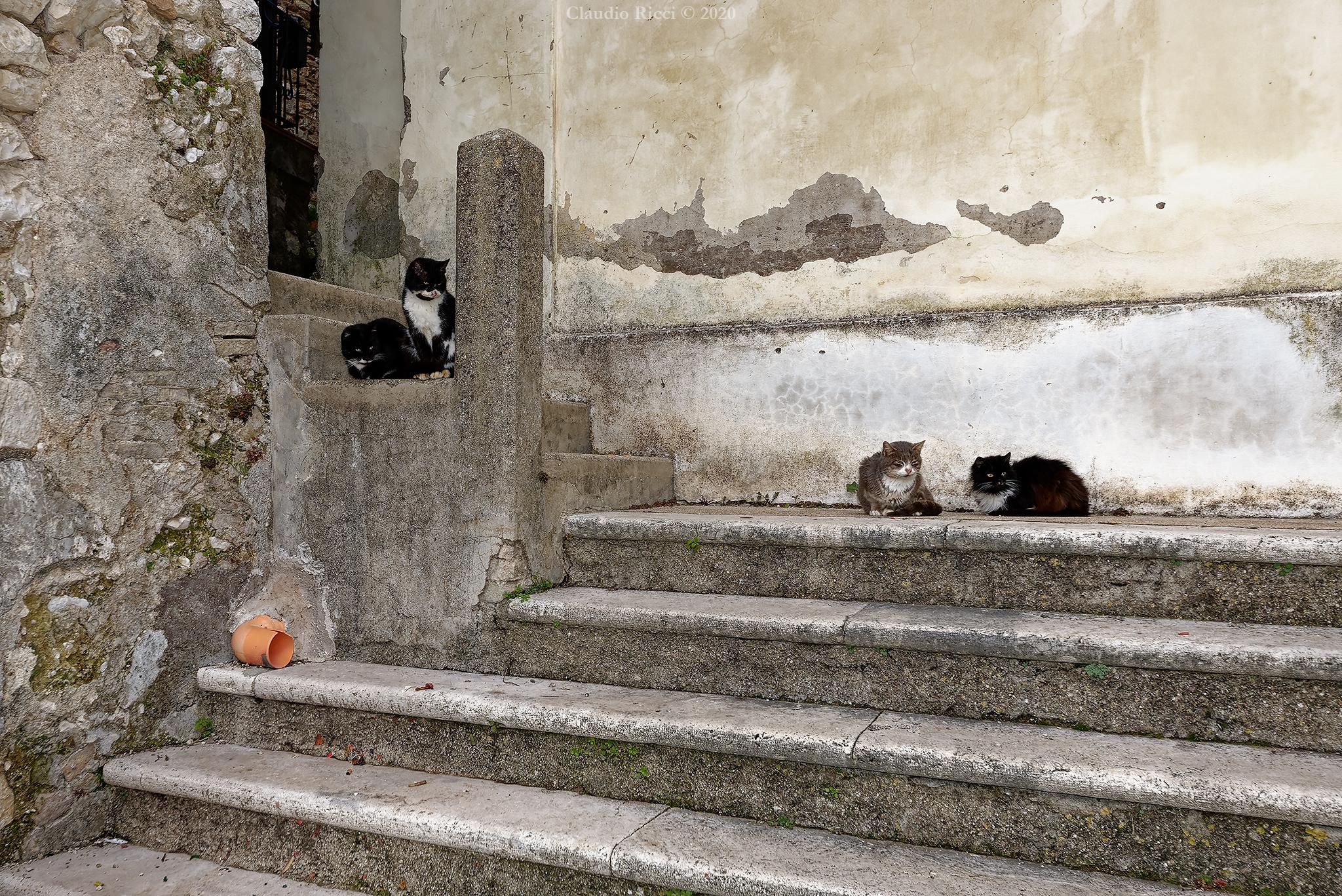 The Citadel of Cats ...
