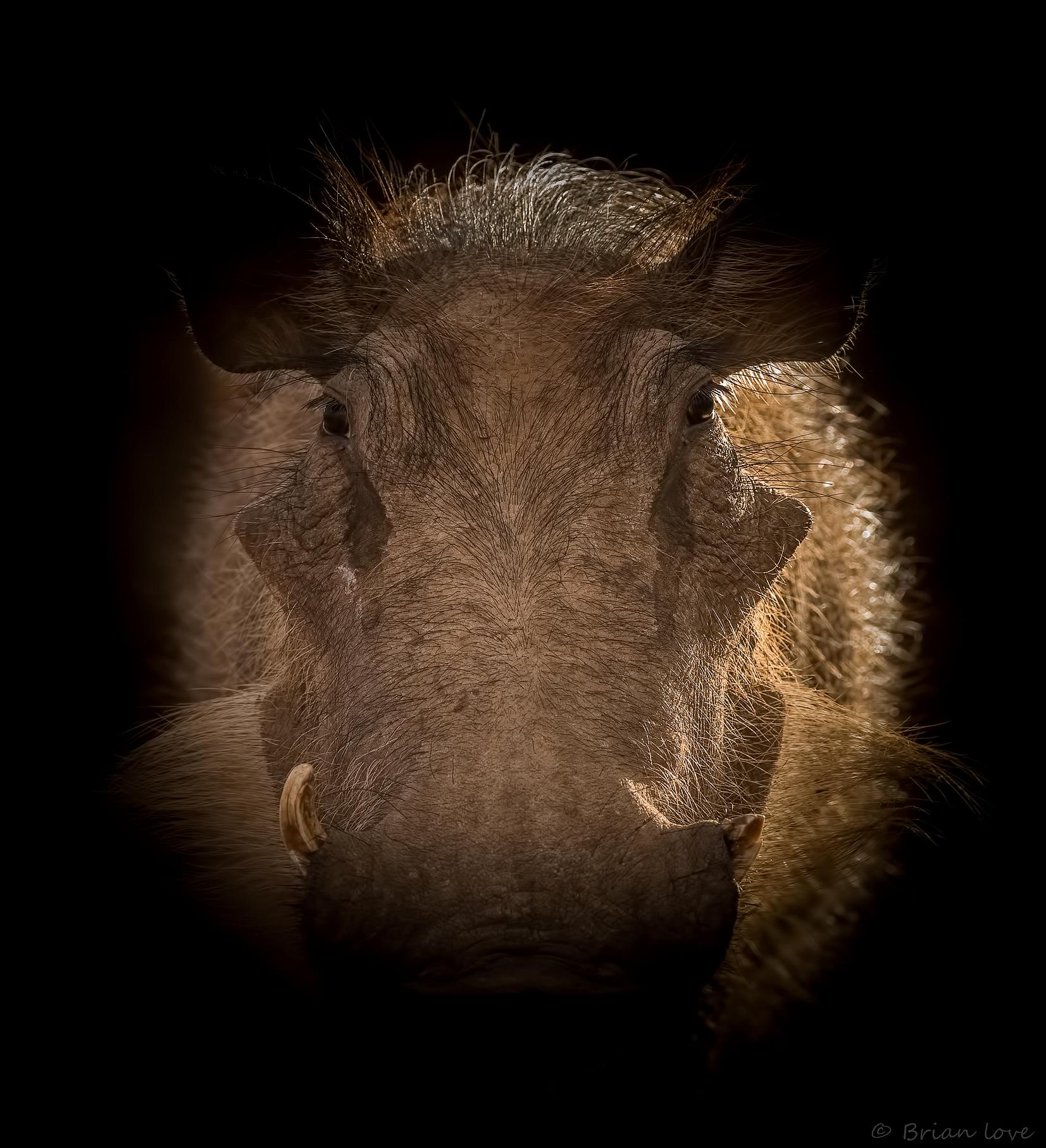 Warthog Backlit...