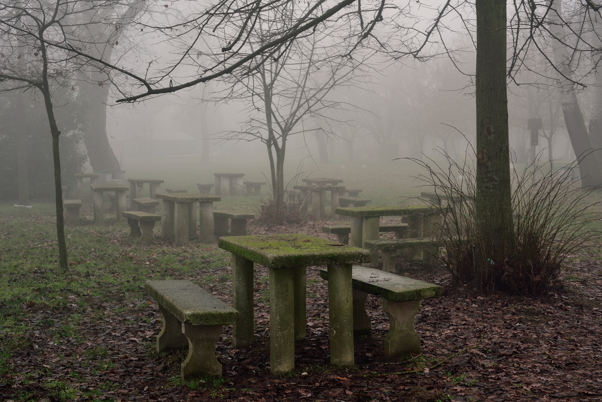 The park on a cold and foggy winter day...