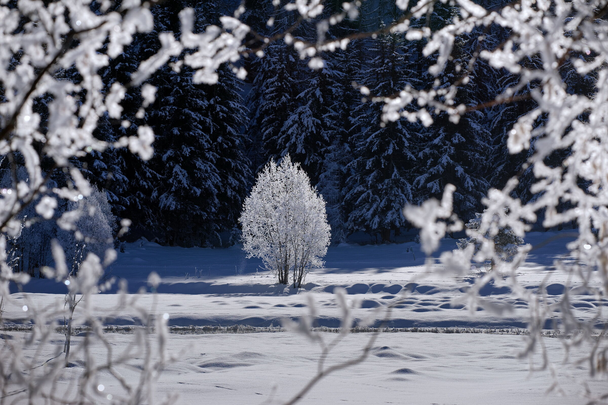 The embroideries of winter...