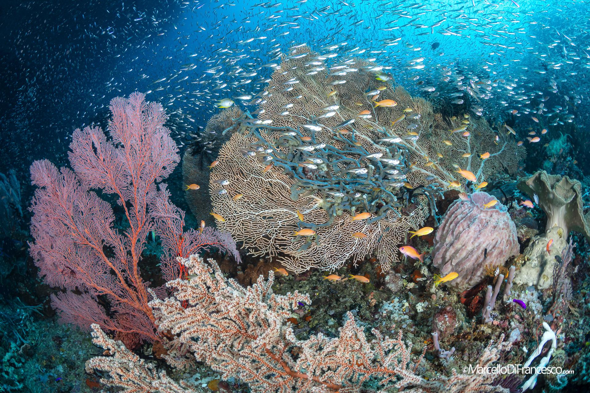 Raja Ampat, Misool Reefscapes...