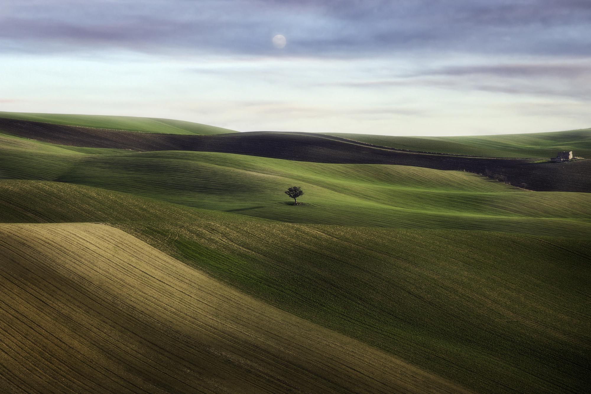 Winter Fields...