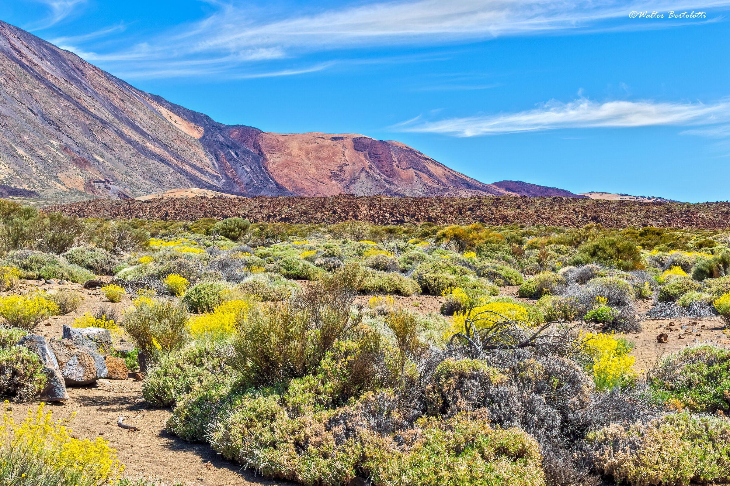 Teide Plateau - 2200 mt...