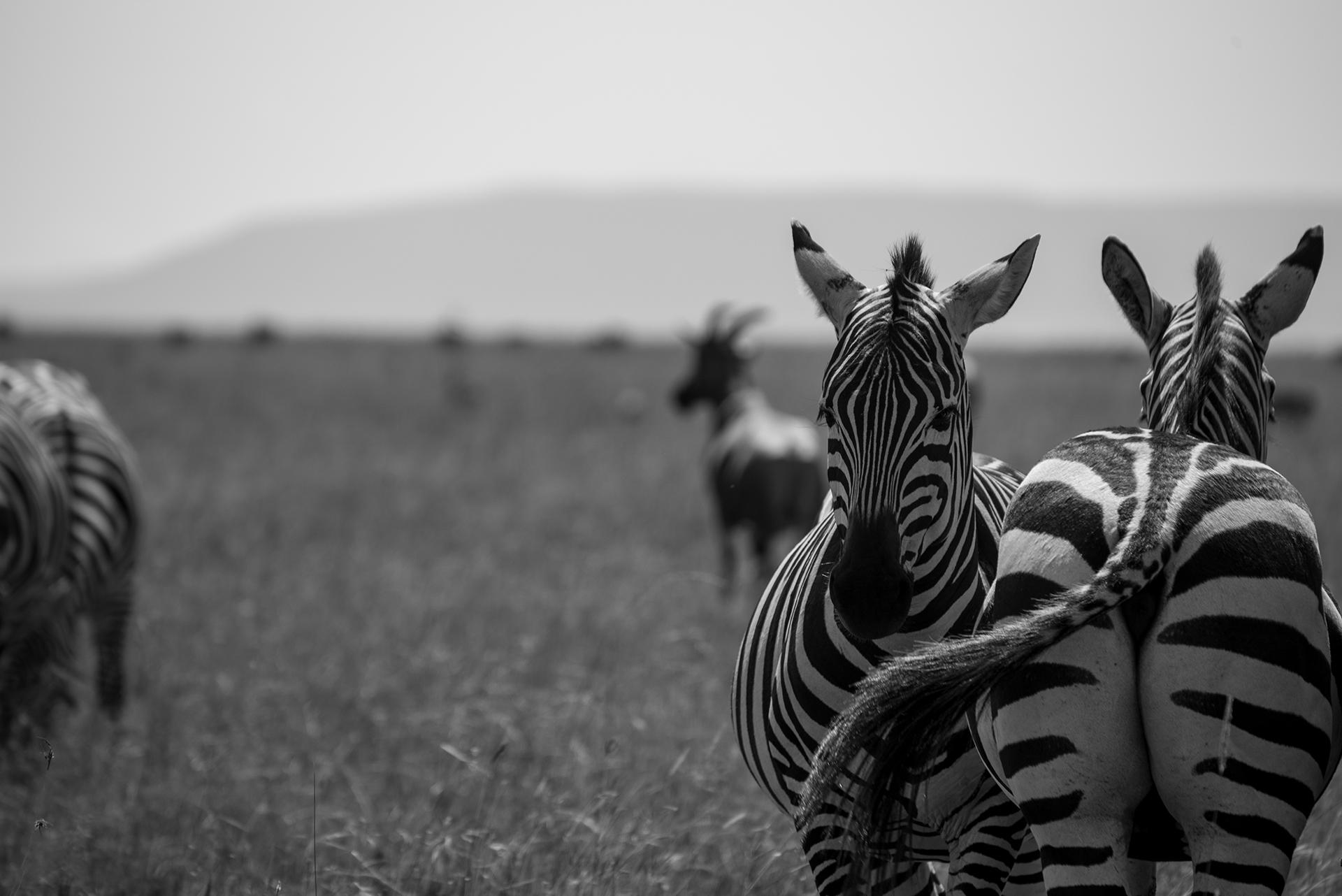 The Hour of Cuddles - Masai Mara ...