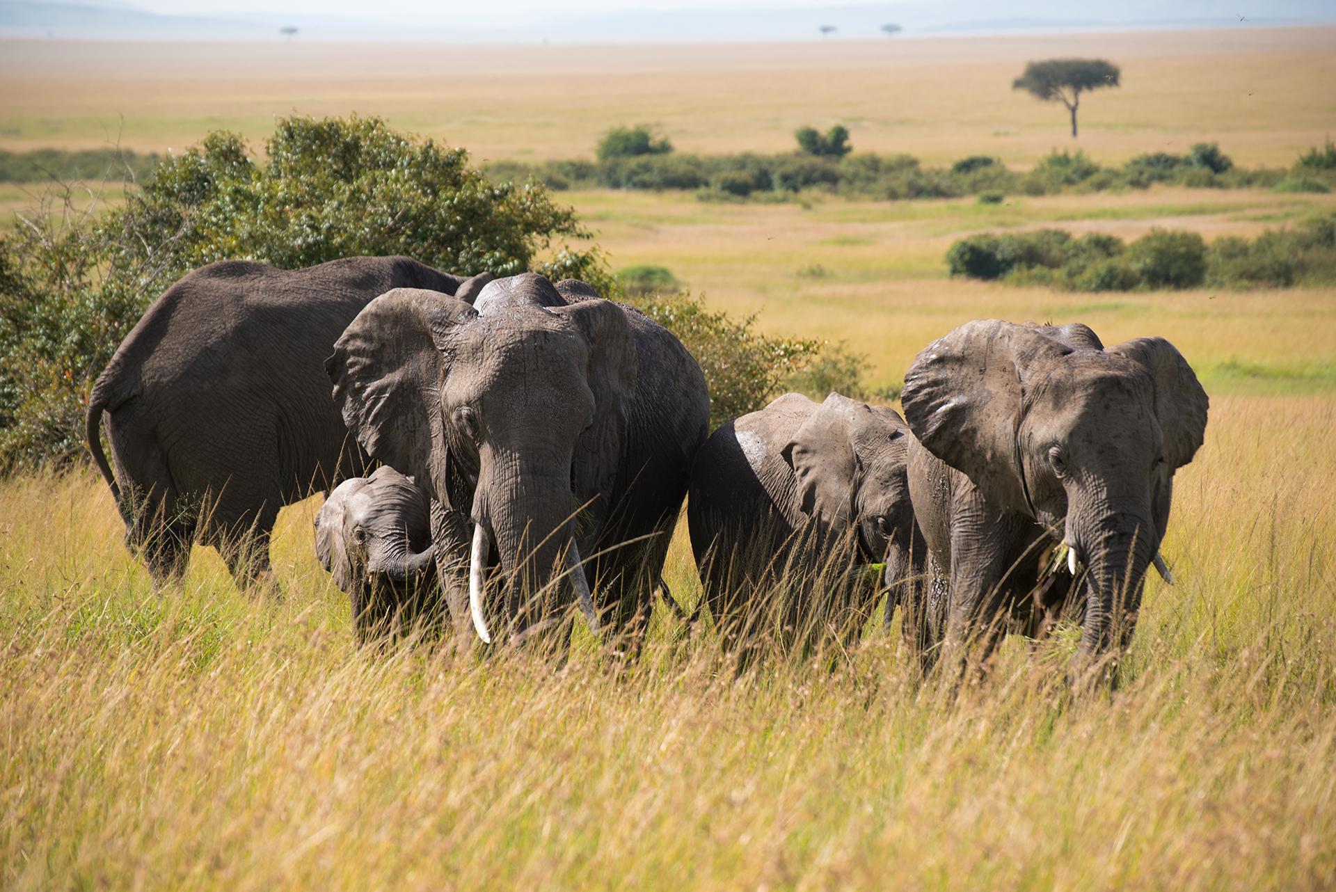 Family Matters - Masai Mara...