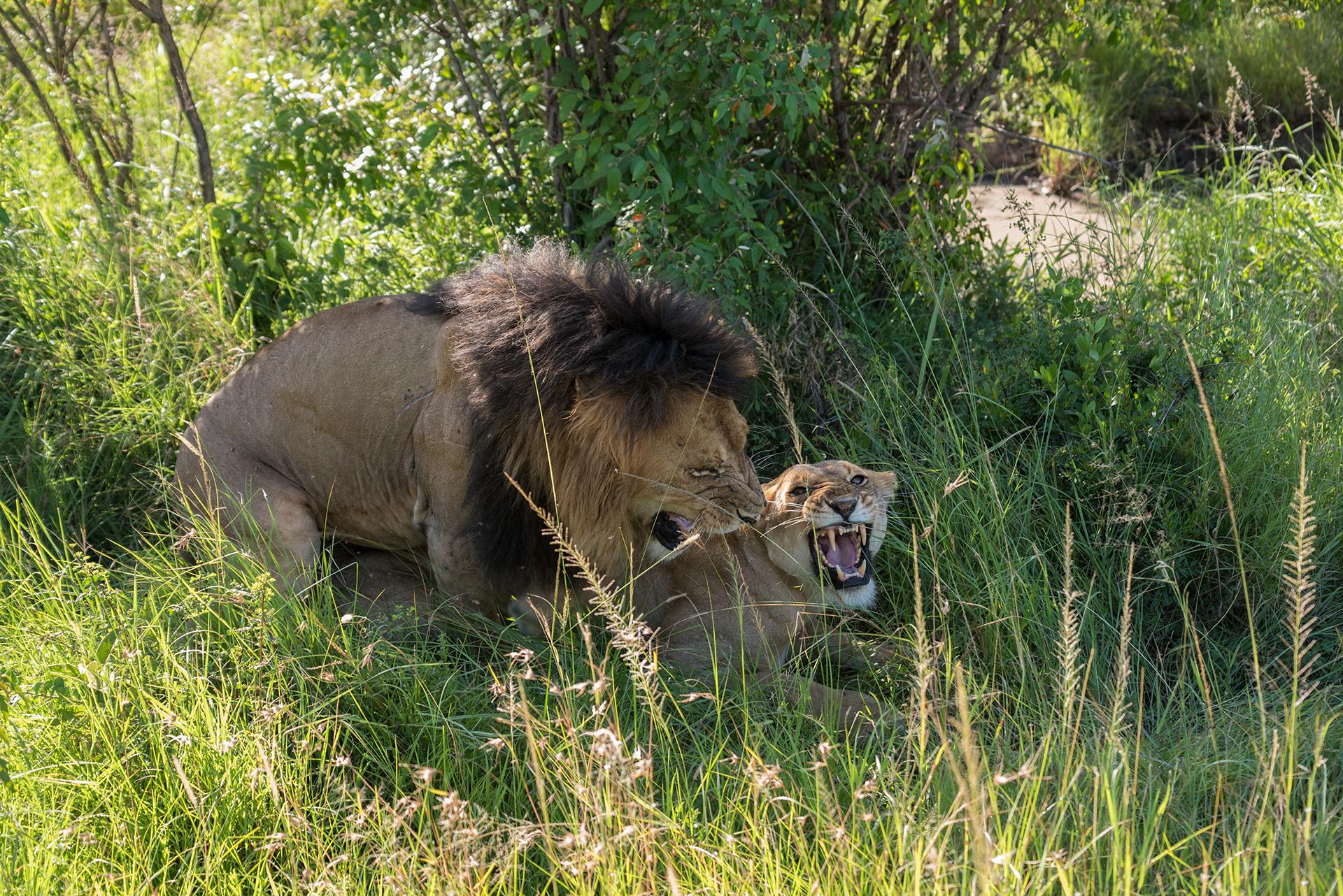 Intimacy Violated - Masai Mara...