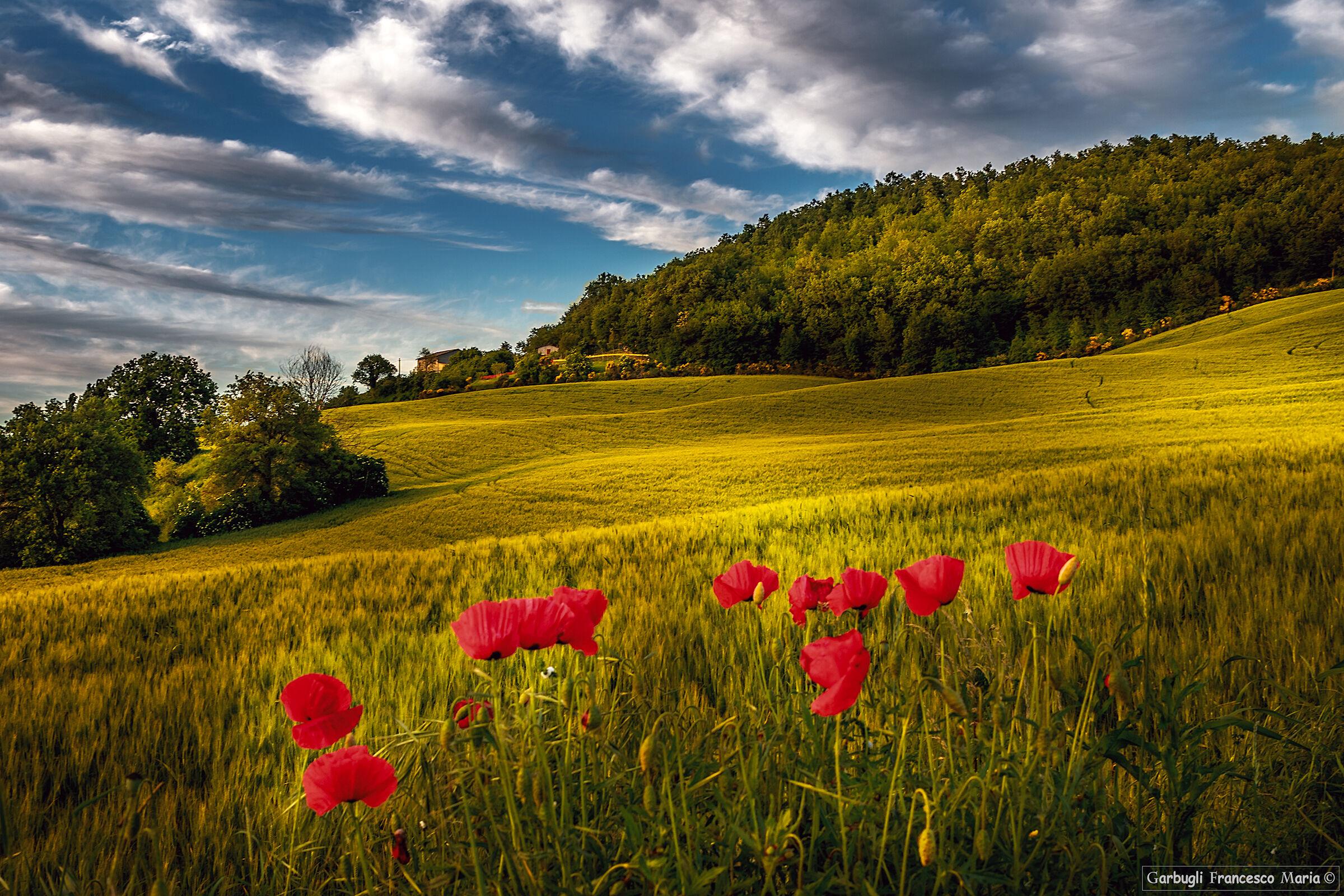 Memories of my hills........